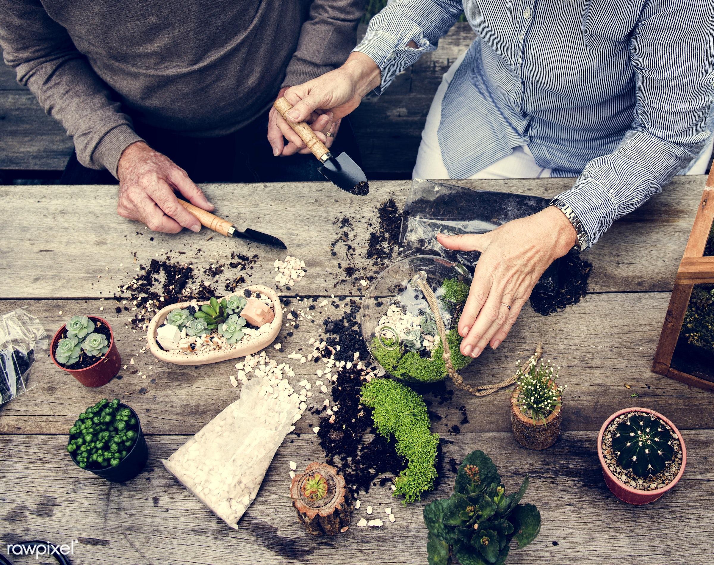 plant, succulent, decorative, handicraft, tropical, moss, terrarium, botanical, miniature, decor, nature, woman, composition...