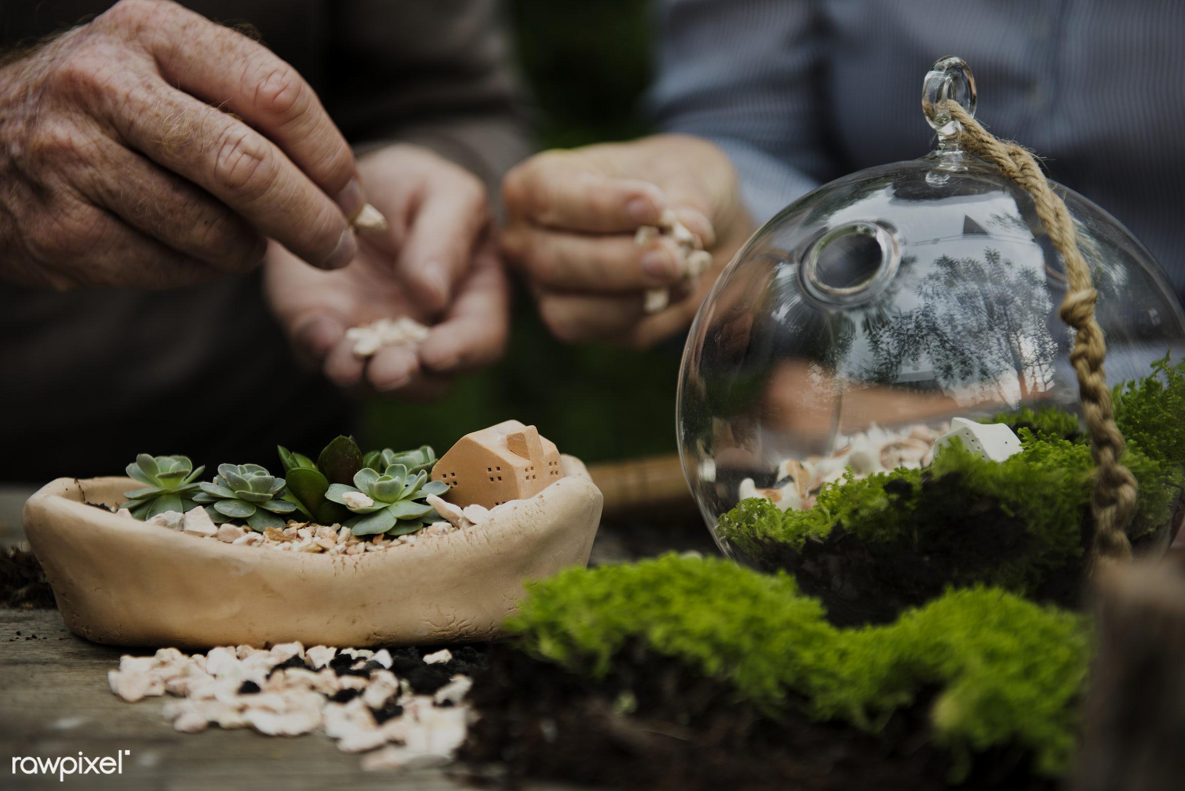 Closeup of terrarium hobby  - closeup, couple, dirt, gardening, hands, miniature, outdoors, rock, soil, together, garden,...