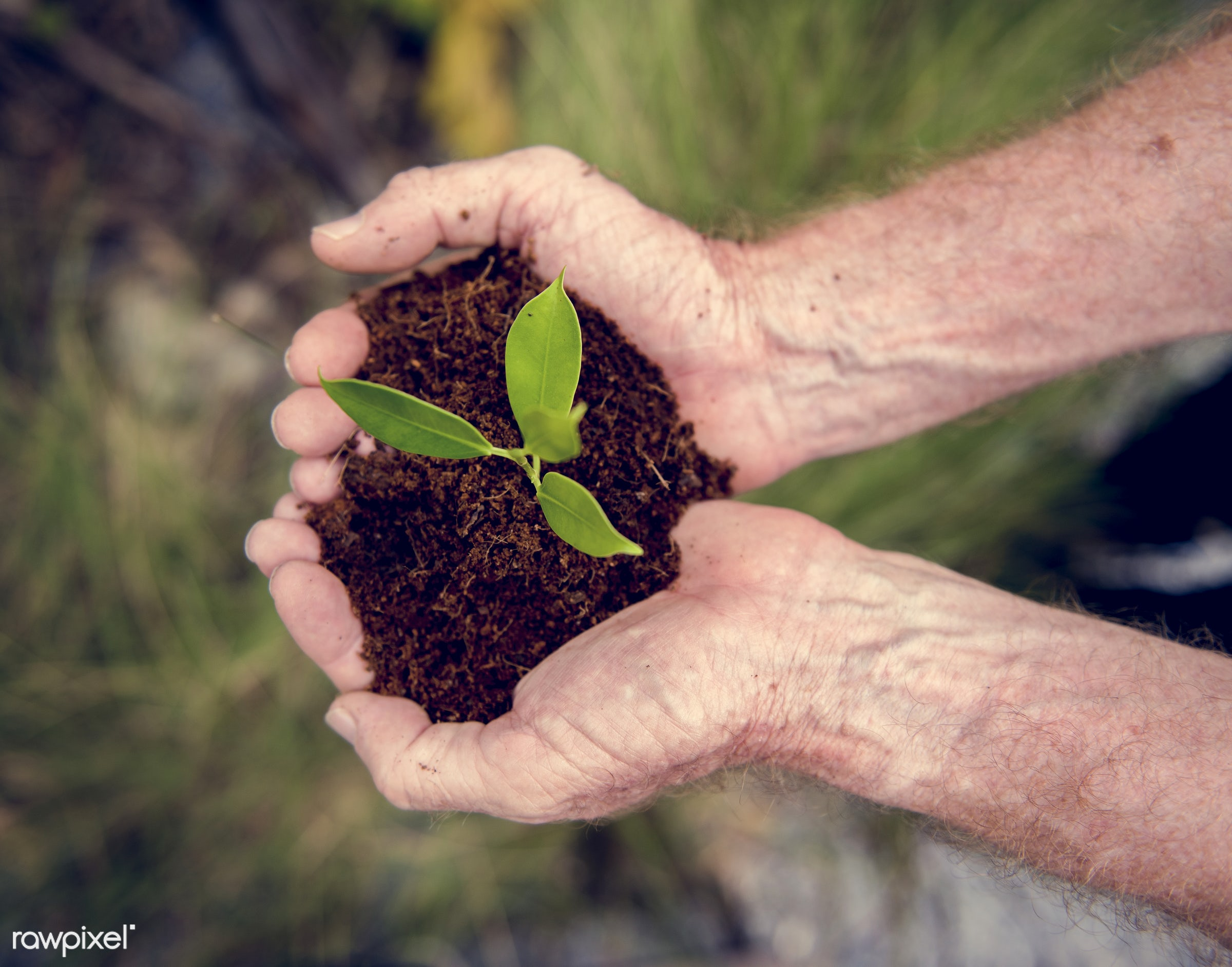 plant, resources, sustainable, environmental conservation, planet, environmentally friendly, life, nature, green business,...