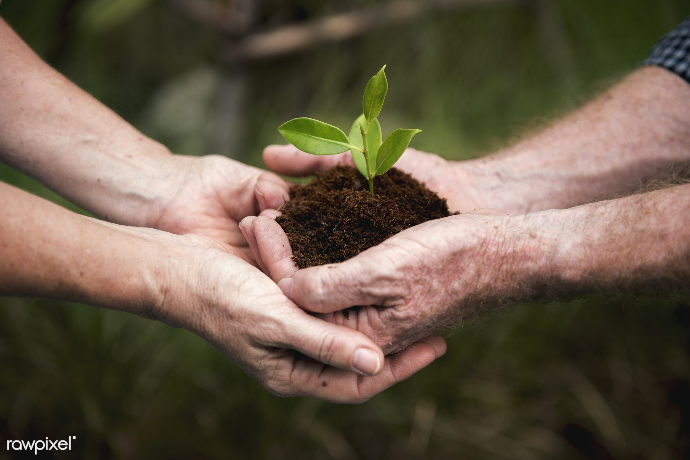 Couple hands holding a pile of earth soil with a growing plant - agriculture, biology, closeup, eco, ecology, environment,...