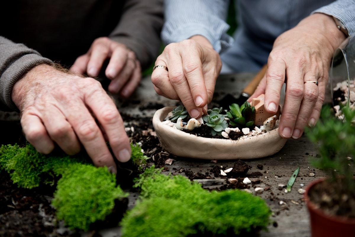 Couple hands making a terrarium with miniature plants