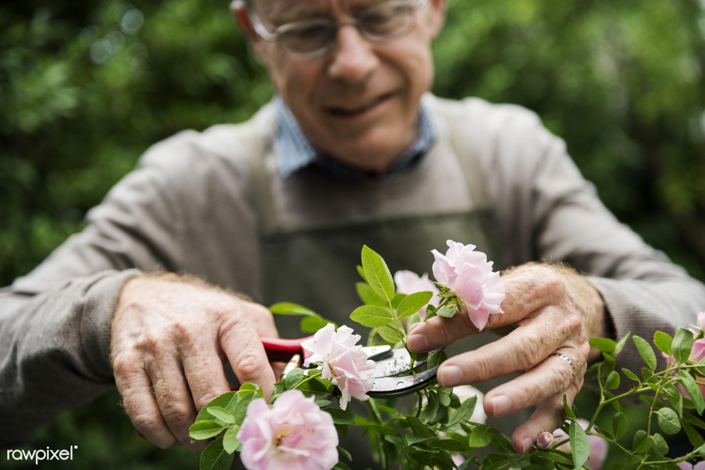 Elderly man flower gardening - people, man, elderly, senior, old, flower, garden, hobbies, green thumb, leisure, plant,...