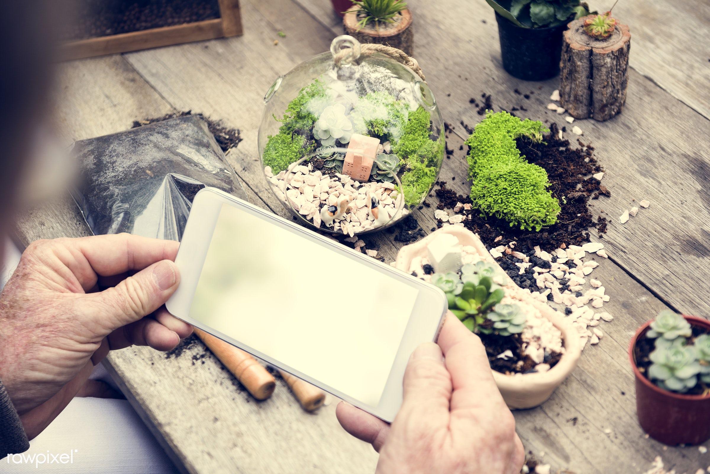 plant, succulent, phone, technology, decorative, handicraft, tropical, moss, terrarium, botanical, digital, miniature, decor...