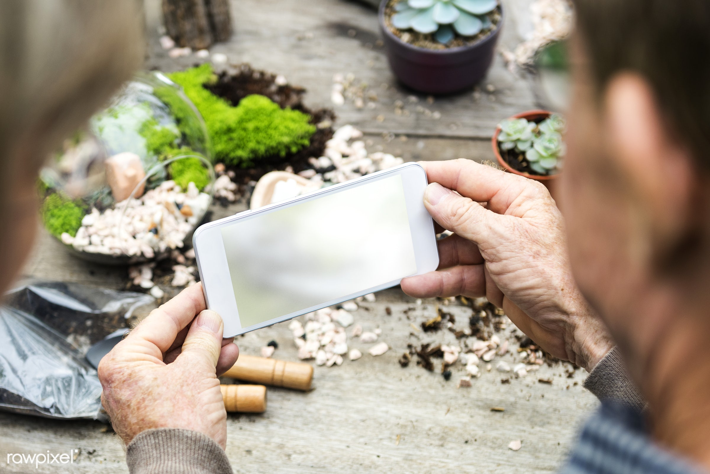 taking a photo of terrarium on the table - photo, picture, mobile, phone, terrarium, hobby, plants, smartphone, camera,...