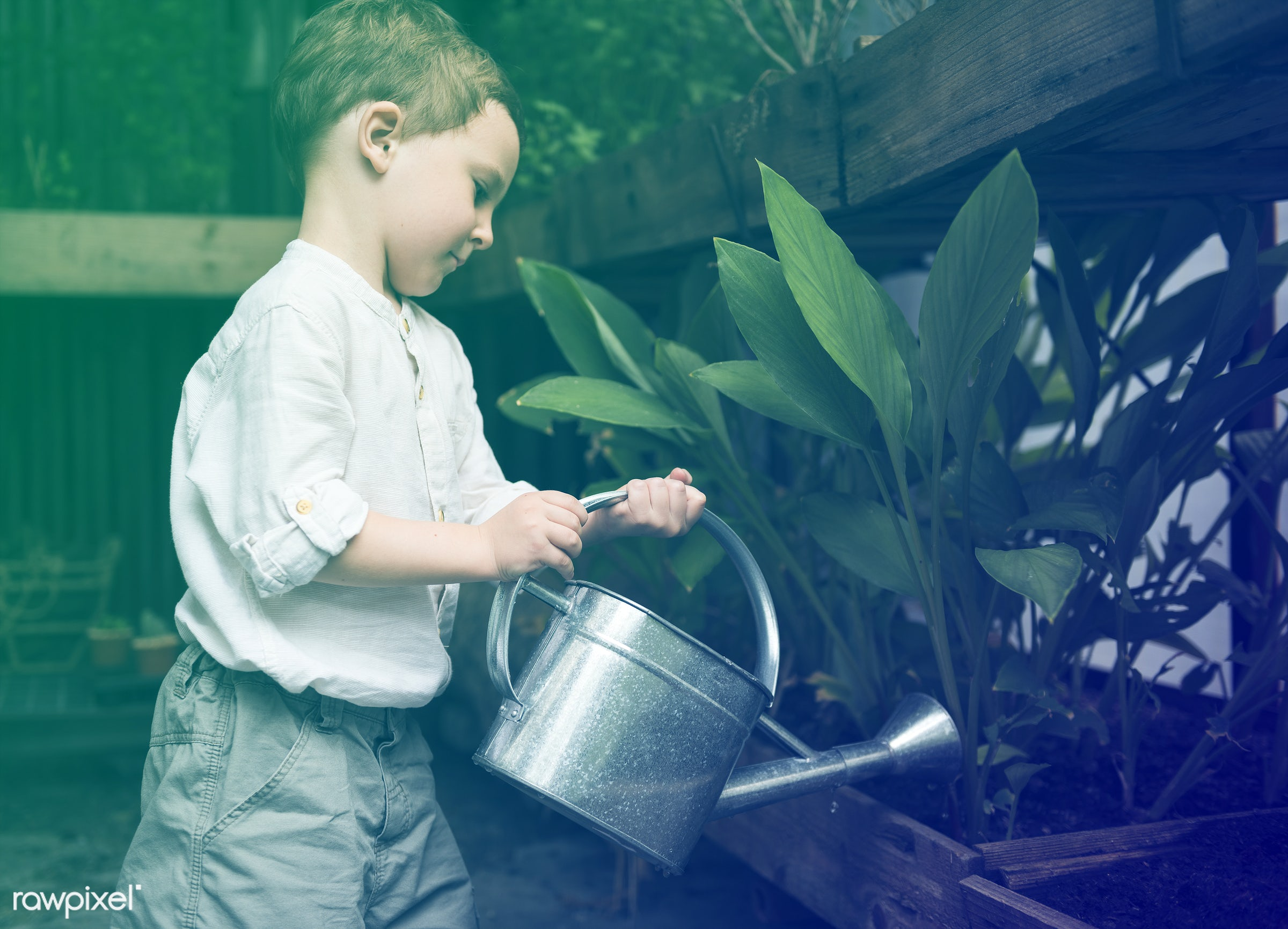 watering, plant, children, recreation, people, kid, child, nature, lomo, interest, ecology, freetime, childhood, passion,...