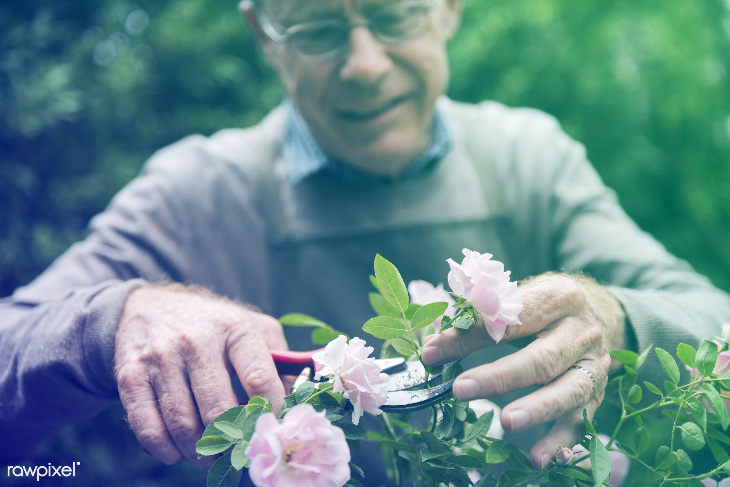 plant, recreation, spring, tree man, nature, lomo, interest, freetime, trimming, ecology, passion, activity, green, male,...