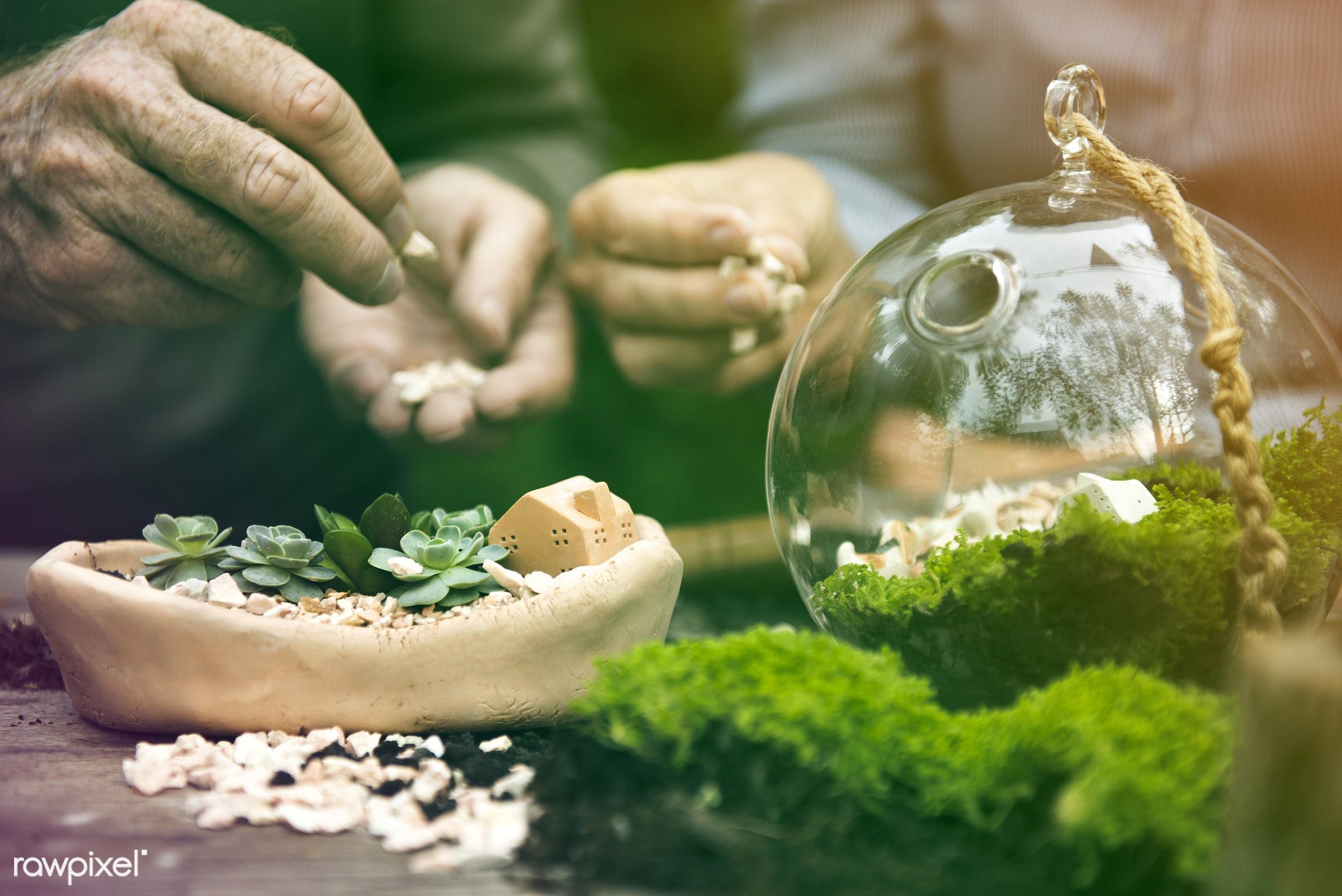 succulent, handicraft, faded, terrarium, vibrant, botanical, decor, nature, woman, blend, composition, light, art, hobby,...