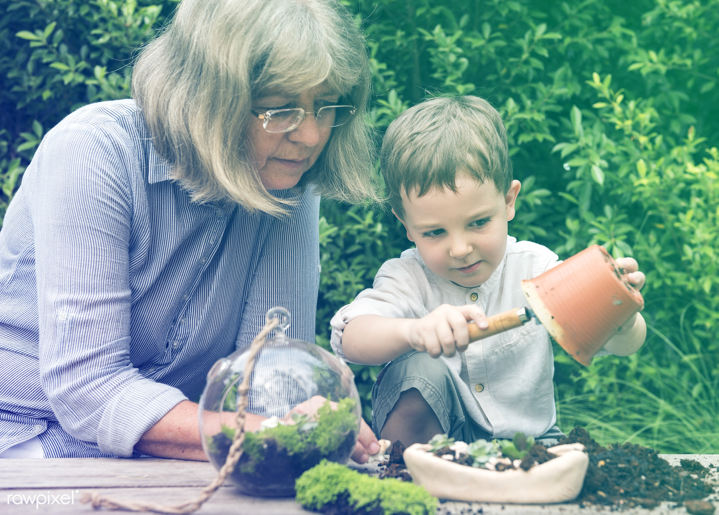 succulent, handicraft, terrarium, botanical, decor, lomo, nature, woman, composition, grandson, hobby, horticulture,...
