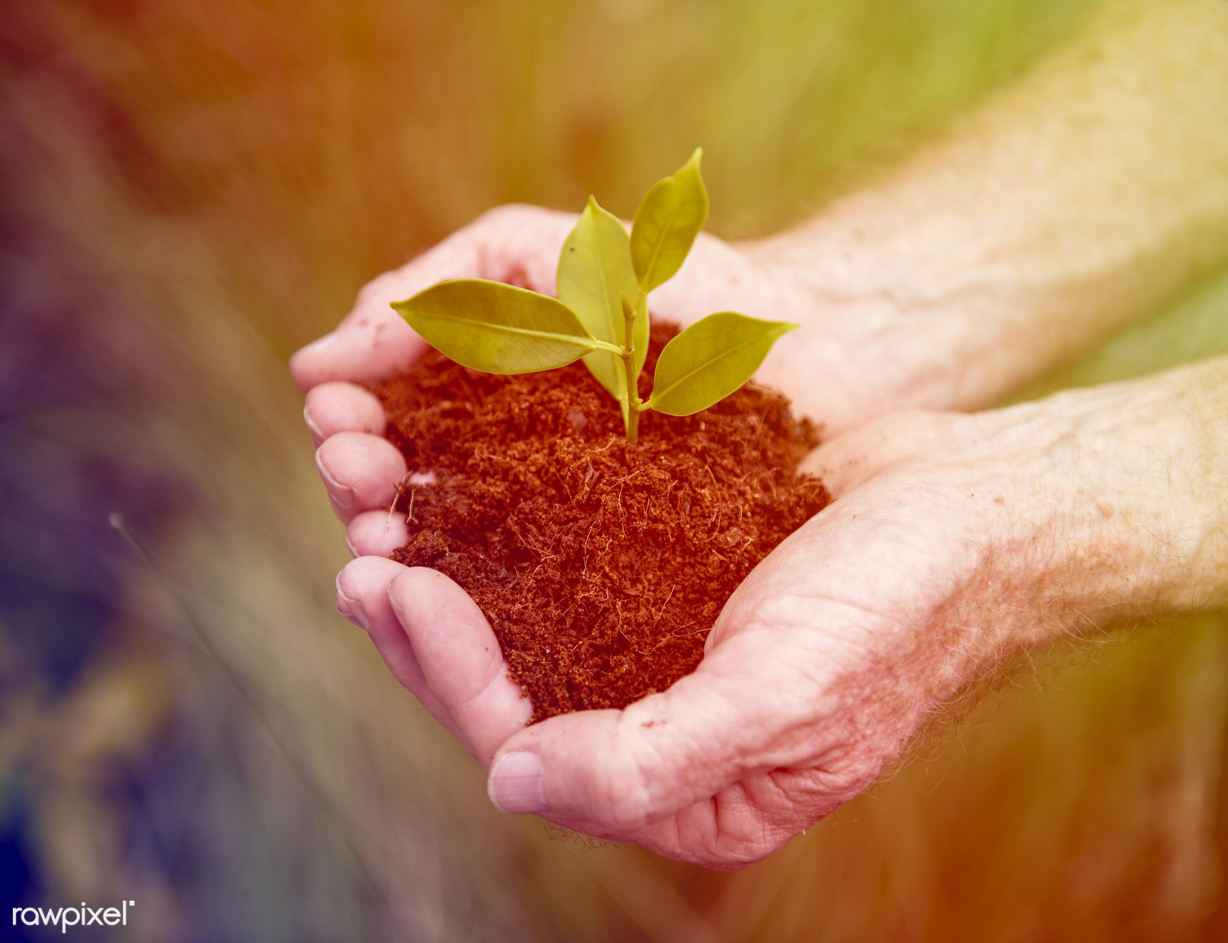 plant, resources, concept, faded, sustainable, vibrant, environmental conservation, planet, environmentally friendly, life,...