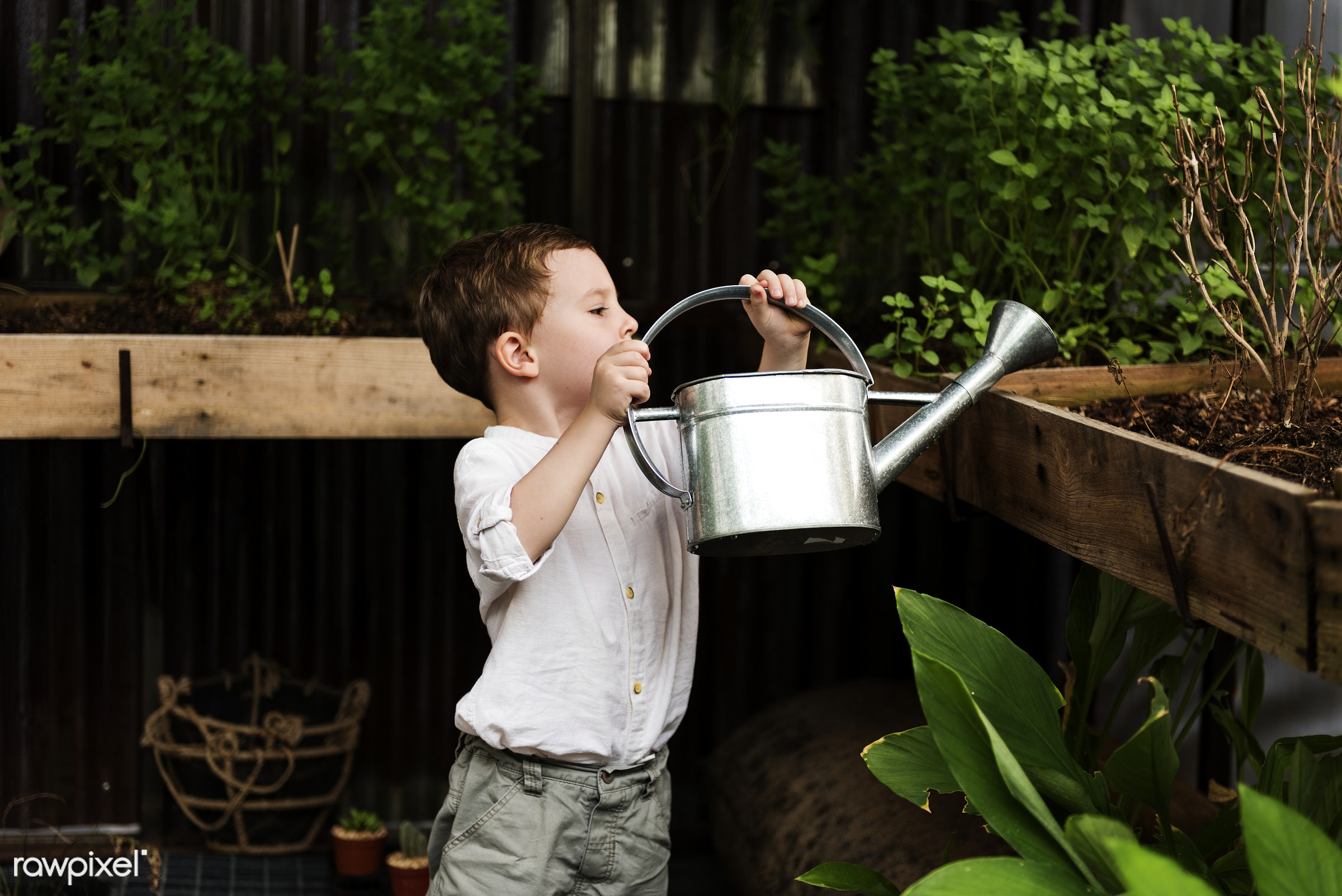 Young boy watering plants in the garden - alone, boy, can, child, environment, garden, green, hobbies, kid, people, plants,...