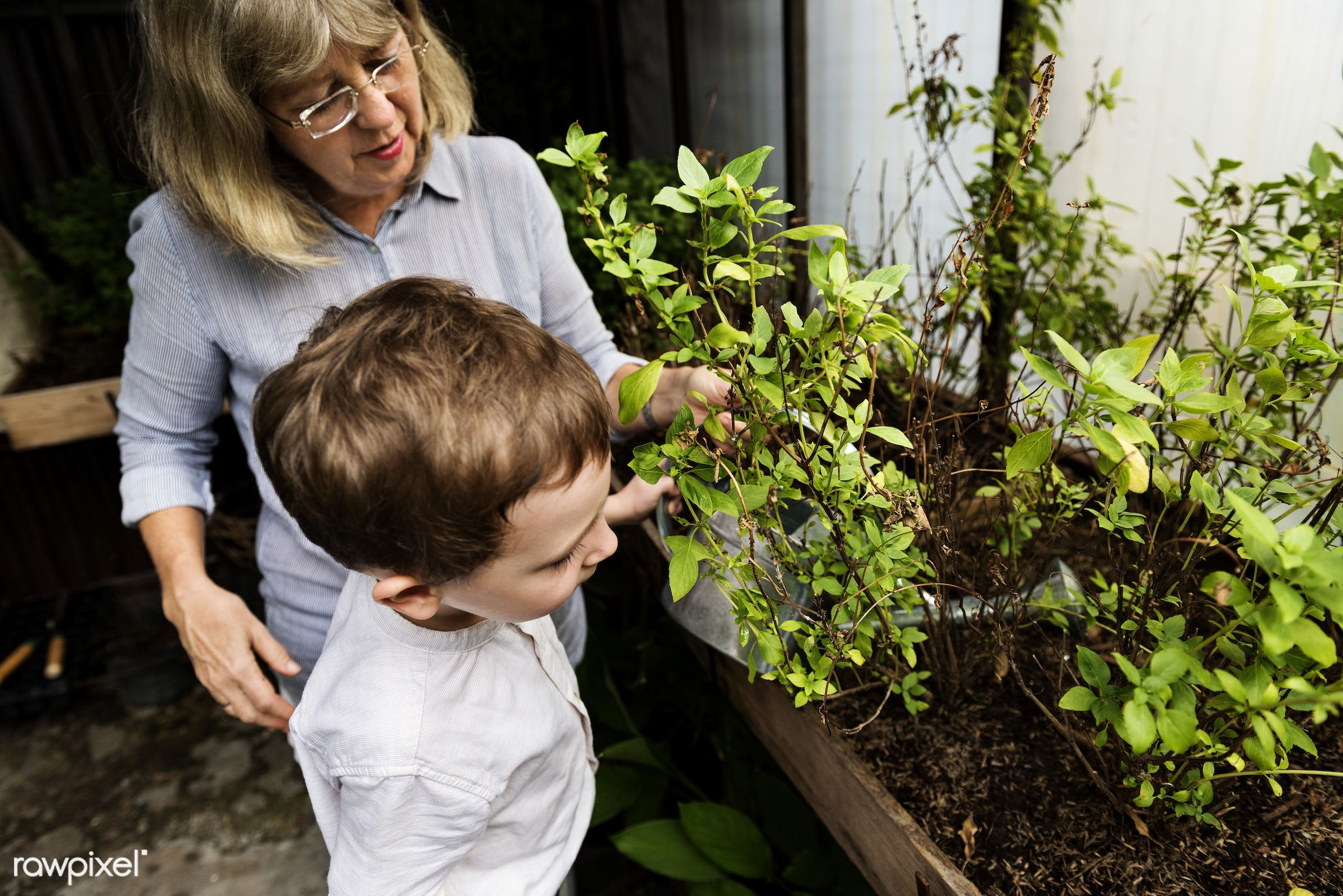 plant, watering, children, recreation, people, kid, child, nature, interest, ecology, freetime, childhood, passion,...