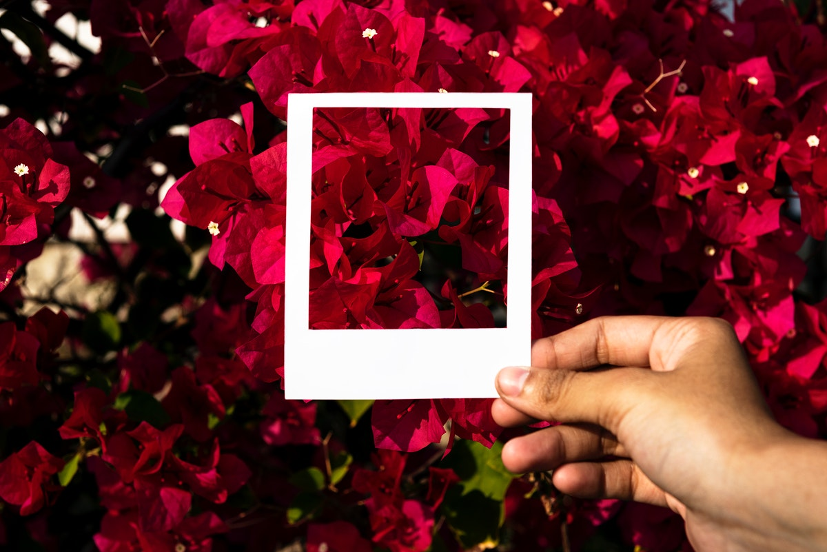 Hand holding photo frame in front of flowers