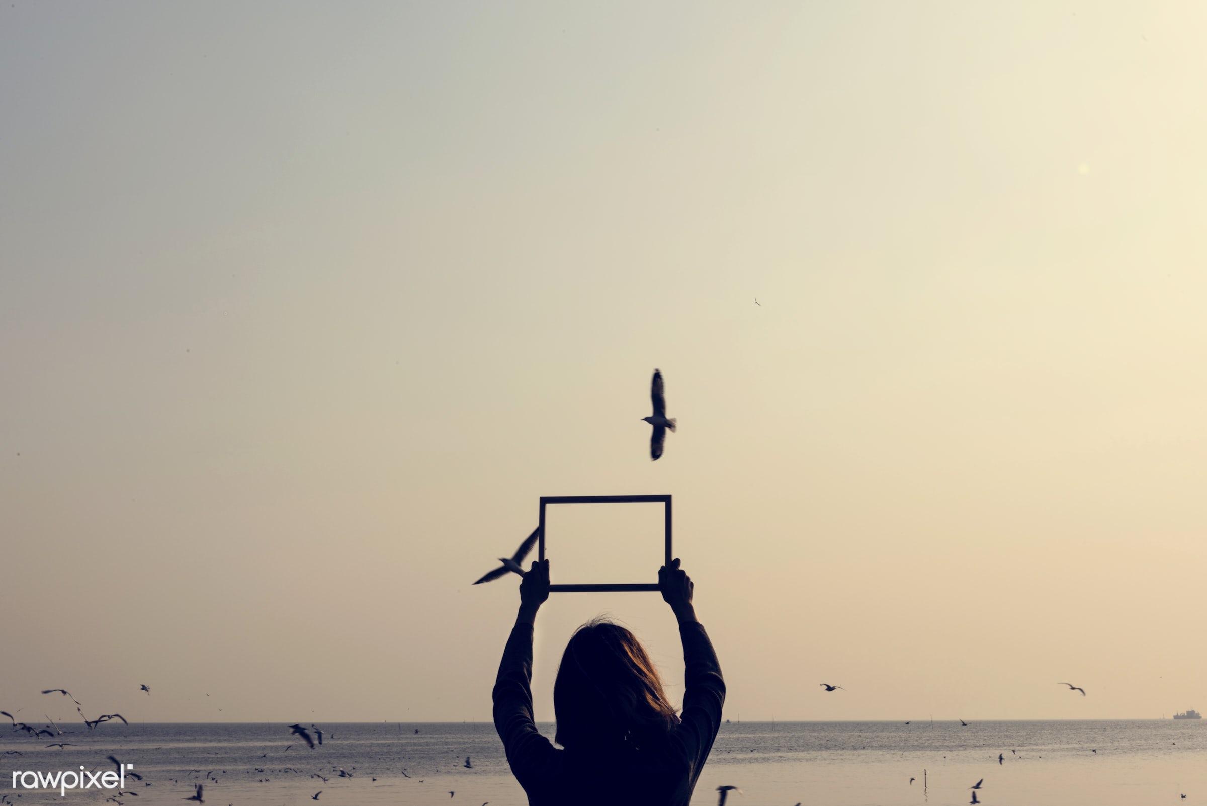 border, bird, empty, fly, frame, girl, holding, migration, nature, ocean, outdoors, person, rectangular, sea, shape, sky,...