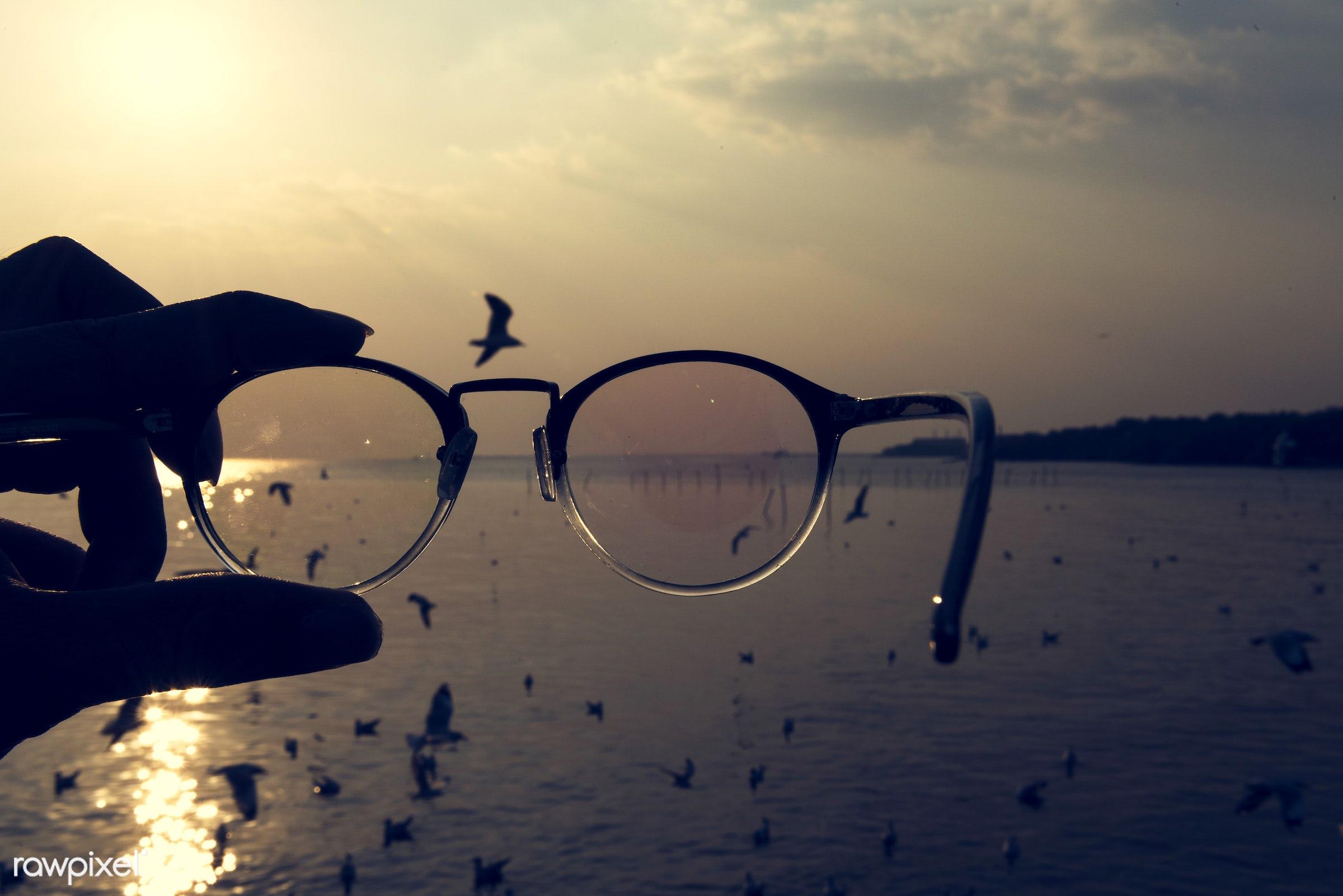 animal, bird, eyeglasses, fly, flying, glasses, hands, holding, migration, nature, ocean, outdoors, sea, sky, soar, sunset,...