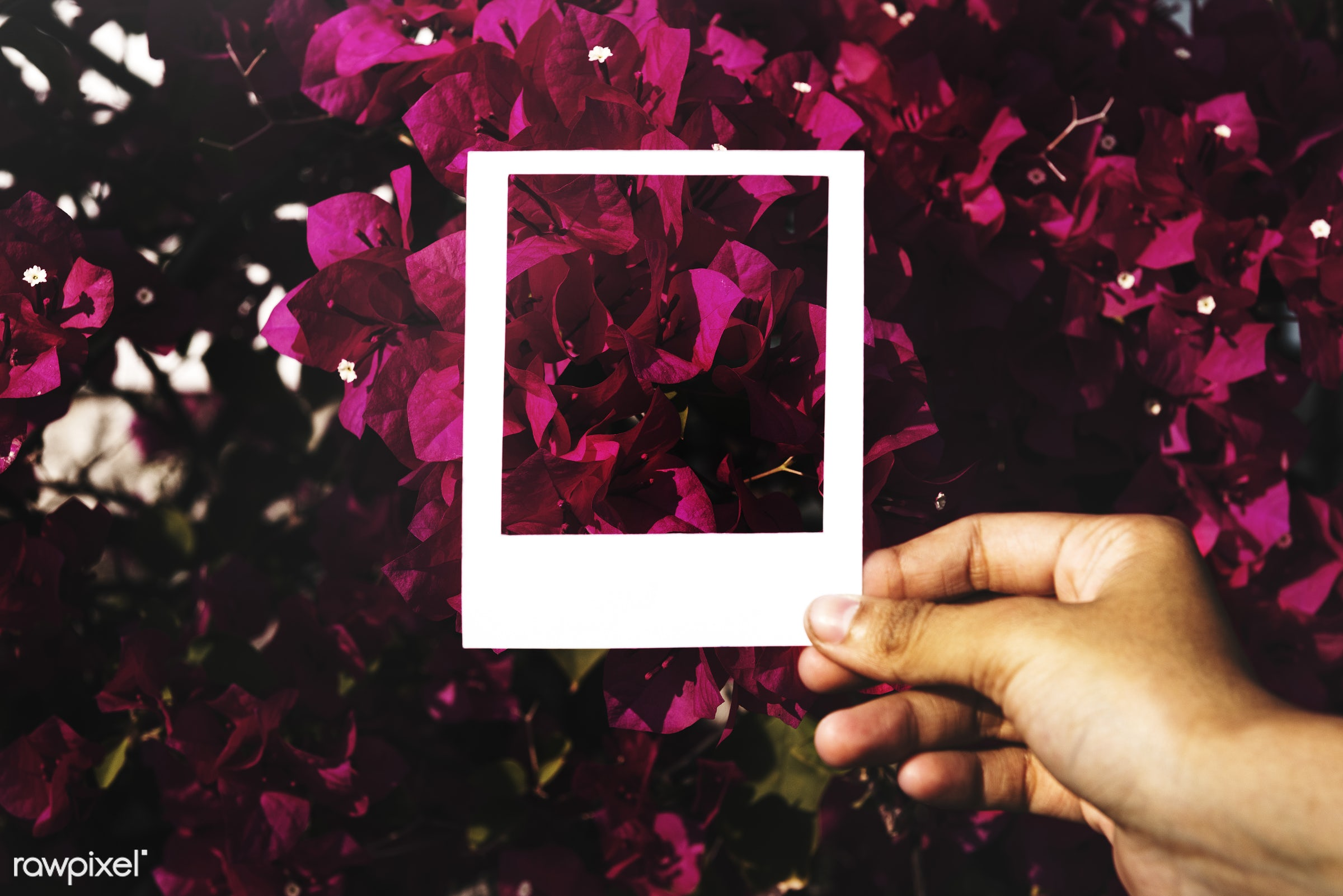 Hand holding photo frame in front of flowers - border, flowers, frame, nature, environment, blank, empty, hole, cutout, hand...