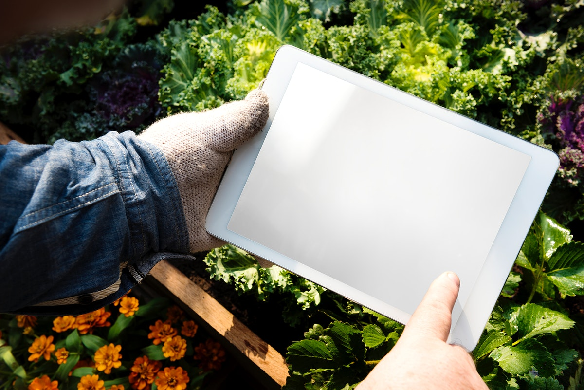 Human hand holding digital tablet organic fresh agricultural product
