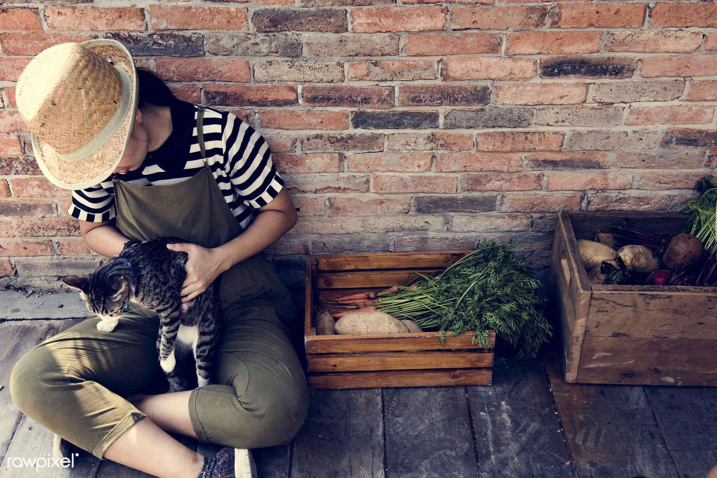 plant, cat, relax, botany, people, hand, nature, farmer, conservation, fresh, vegetarian, ingredient, ecology, hold, season...