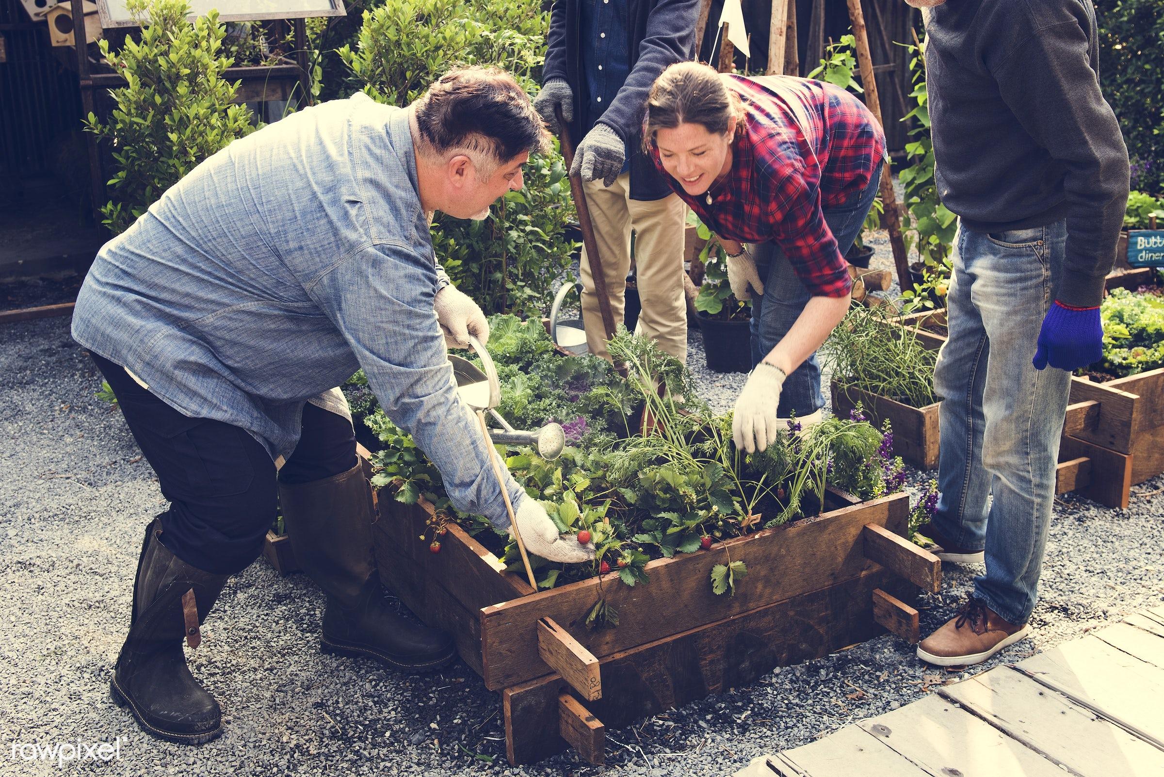 plant, tomato, nutritious, greenhouse, friends, farmer, fresh, lettuce, healthy eating, friendship, men, flower, diversity,...