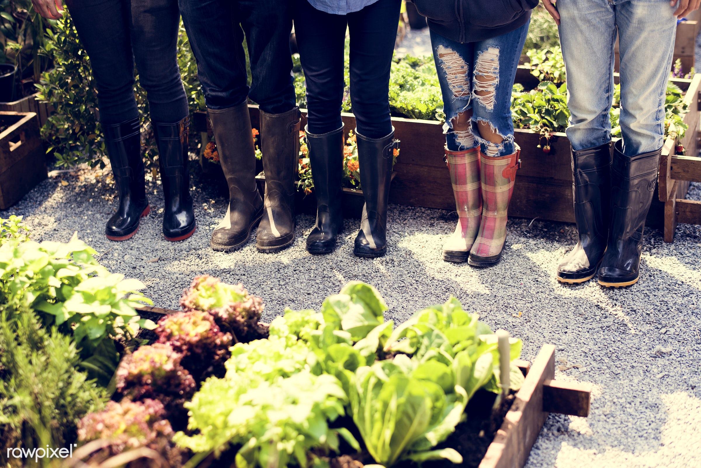 plant, body, nutritious, greenhouse, friends, human leg, farmer, fresh, lettuce, healthy eating, friendship, men, support,...