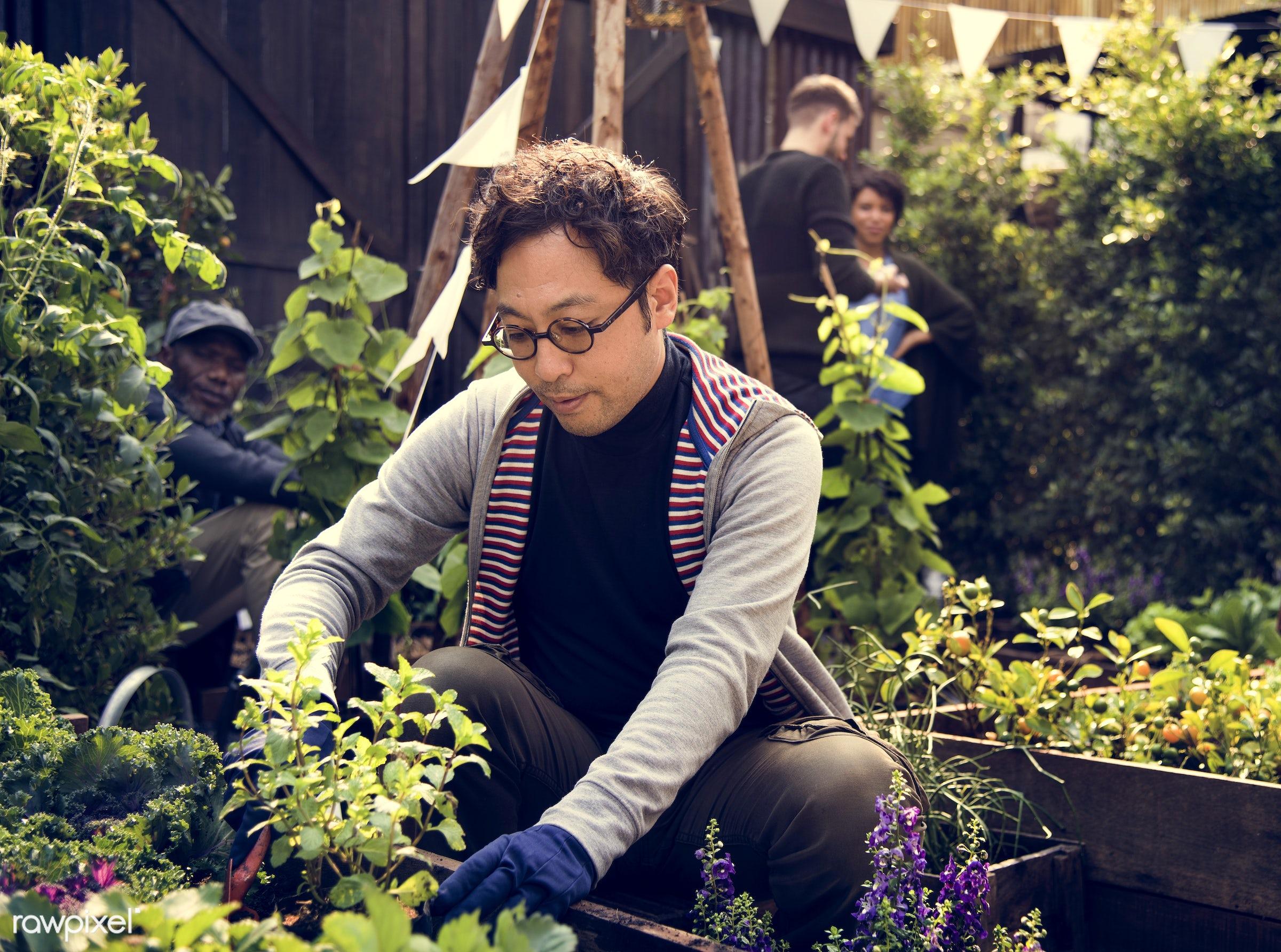 plant, nutritious, tomato, greenhouse, basil, asian ethnicity, friends, farmer, fresh, lettuce, healthy eating, friendship,...