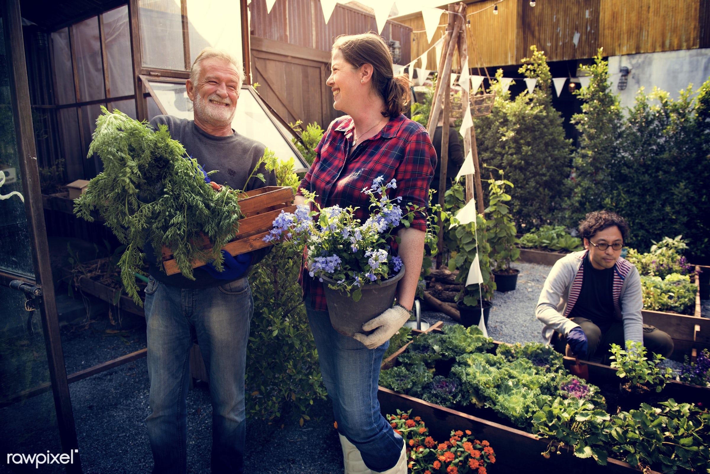 plant, nutritious, tomato, carrot, greenhouse, friends, farmer, fresh, lettuce, healthy eating, friendship, men, smile,...