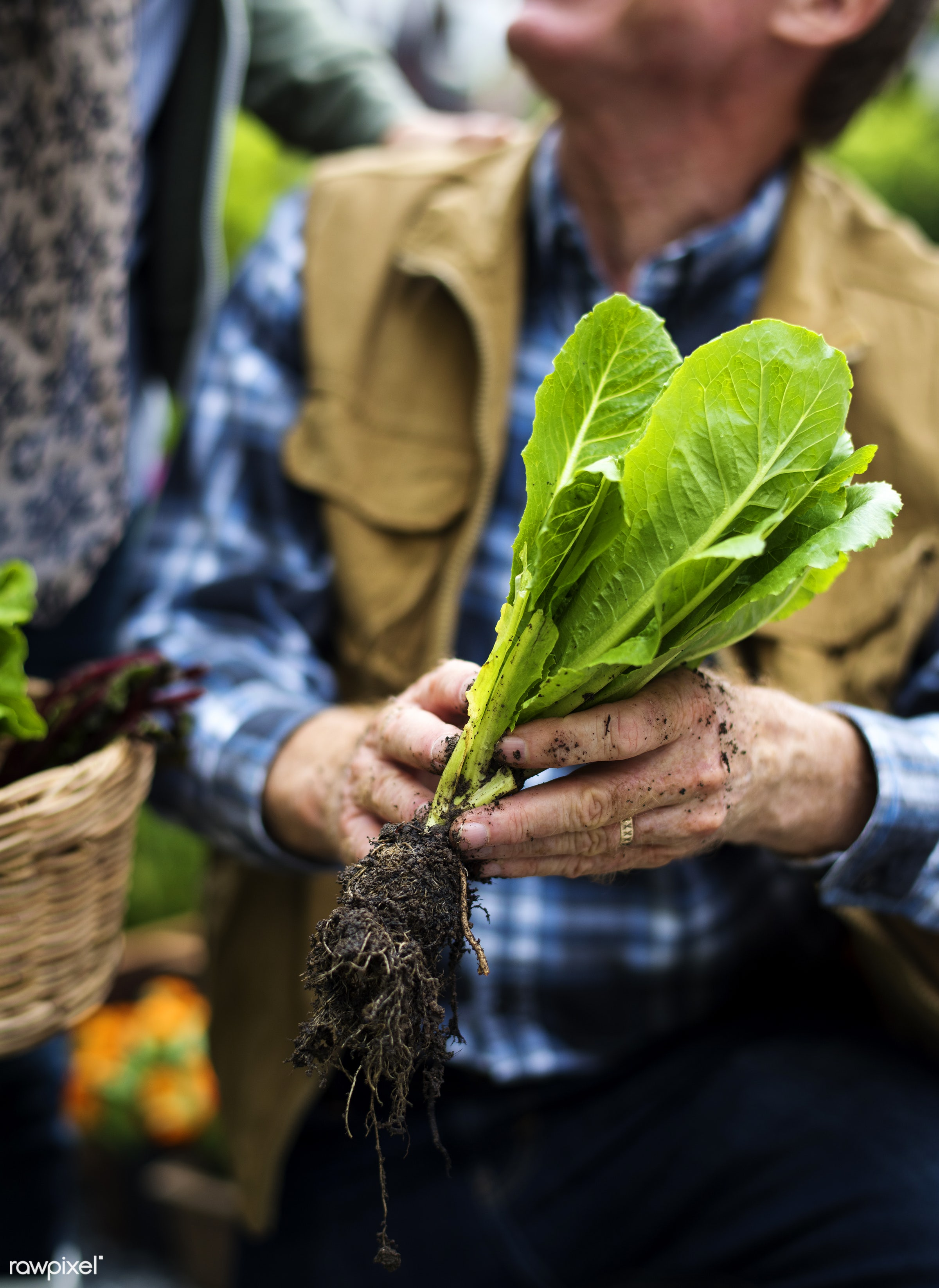 salad, person, root, holding, people, nature, woman, lifestyle, shirt, ring, health, nutrition, food, vegetable, soil, raw,...
