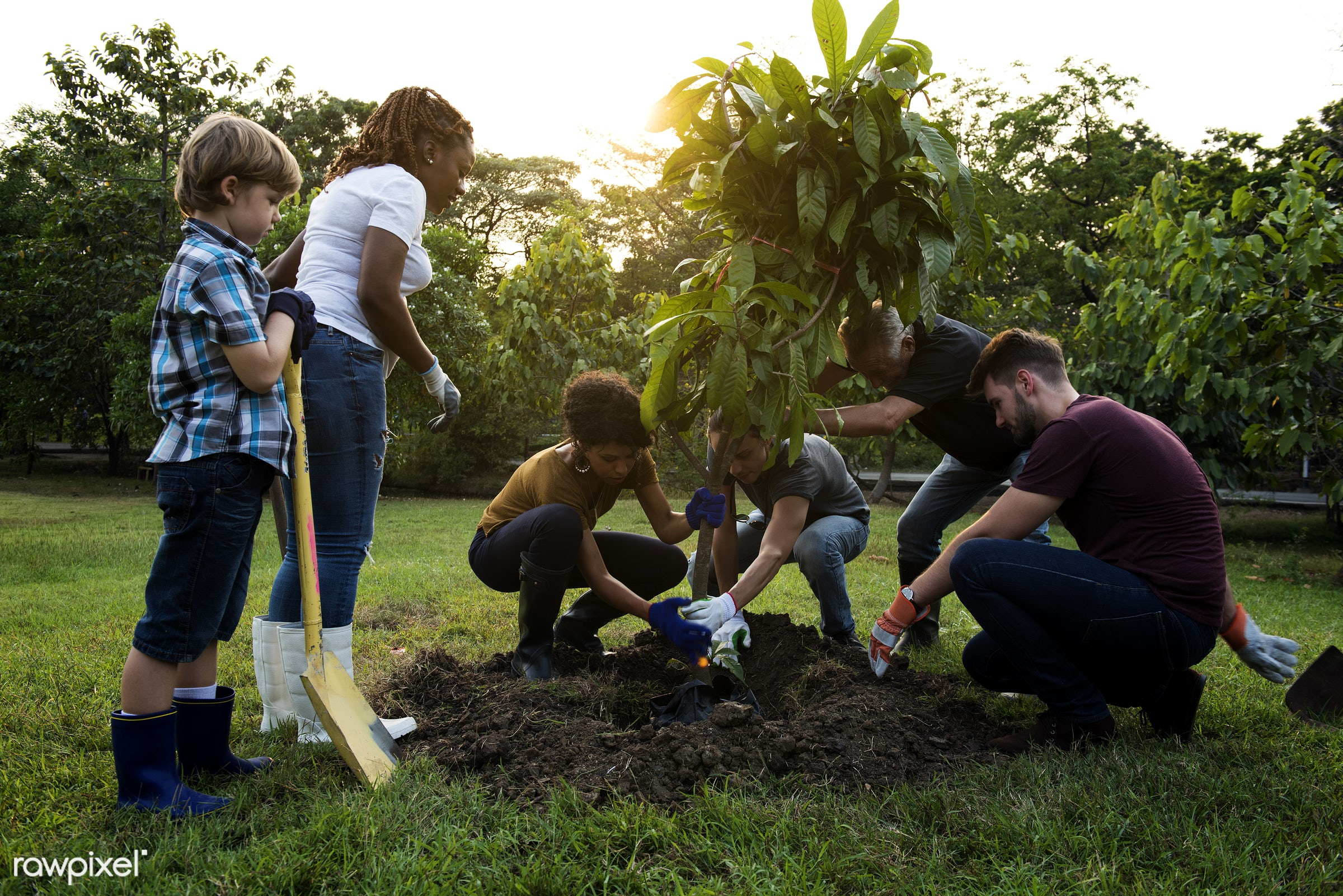 plant, person, plants, leaves, spring, people, caucasian, hand, farm, farmer, tree, hands, fresh, tree bed, dig, dirt,...
