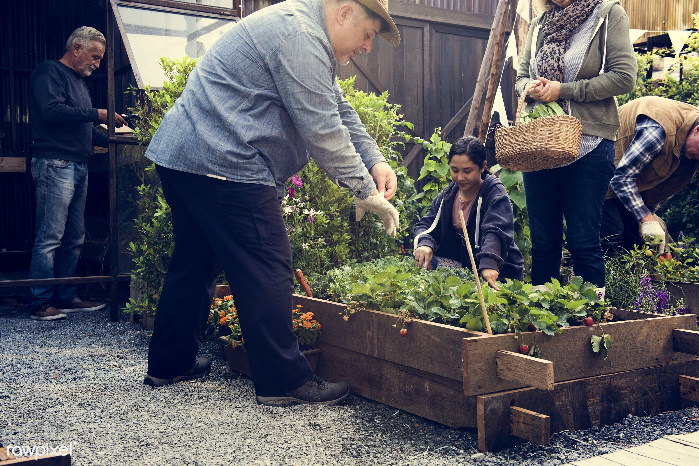 person, leaves, people, crop, farmer, nature, woman, cultivation, agriculture, planting, strawberry, present, gardener,...