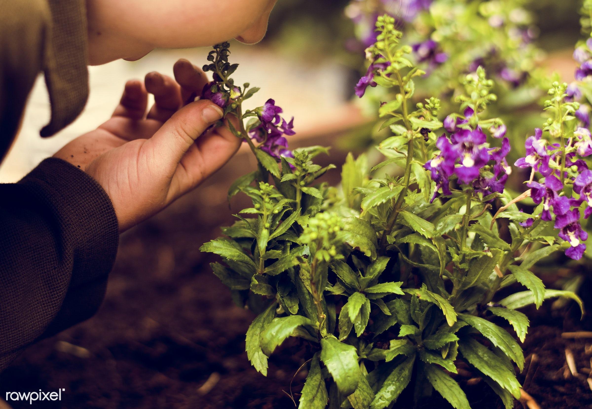 countryside, diverse, greenhouse, botanical, plantation, people, kid, teamwork, friends, tree, nature, lifestyle, friendship...