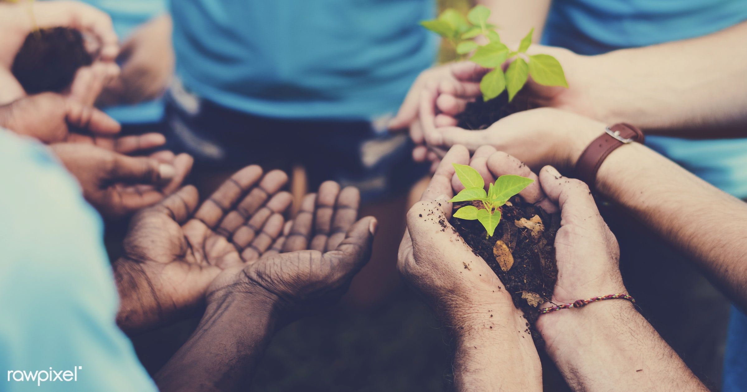 person, diverse, charity, people, together, kid, friends, nature, woman, family, lifestyle, care, voluntary, cheerful, work...