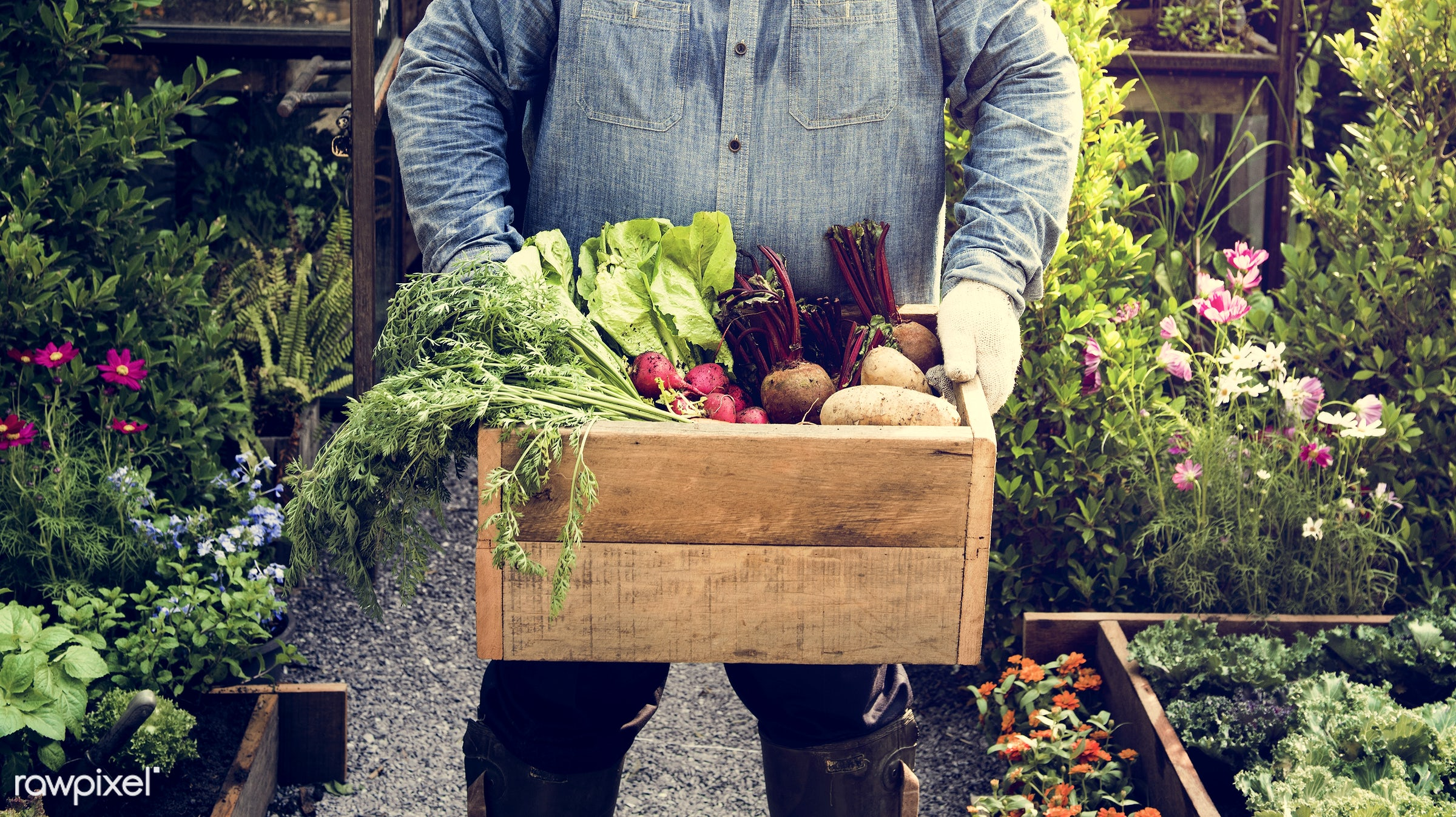 plant, nutritious, holding, greenhouse, farmer, fresh, lettuce, healthy eating, man, flower, green, agriculture, planting,...