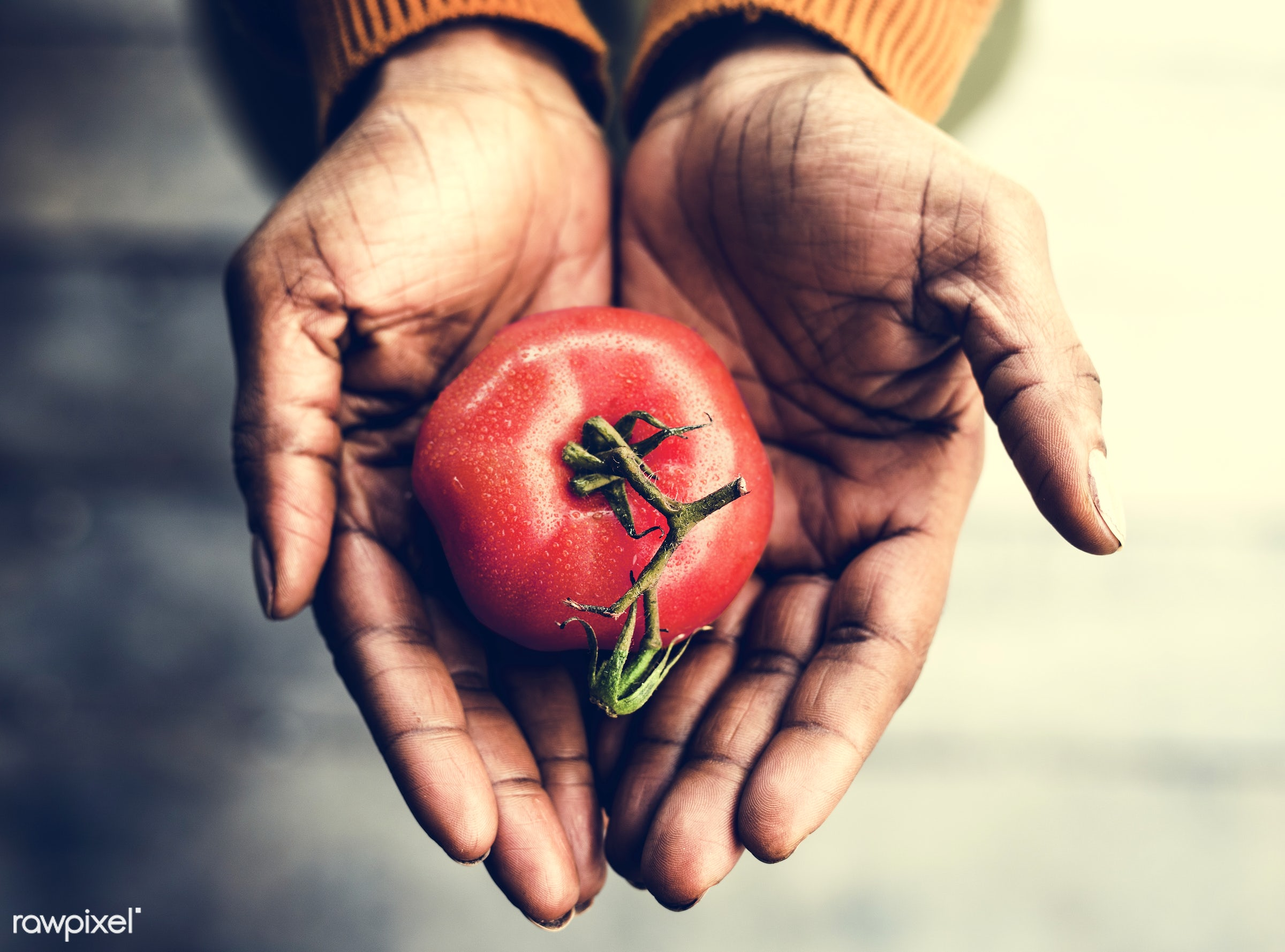 raw, plant, concept, tomato, botany, people, hand, nature, farmer, conservation, fresh, care, vegetarian, ecology, hold,...