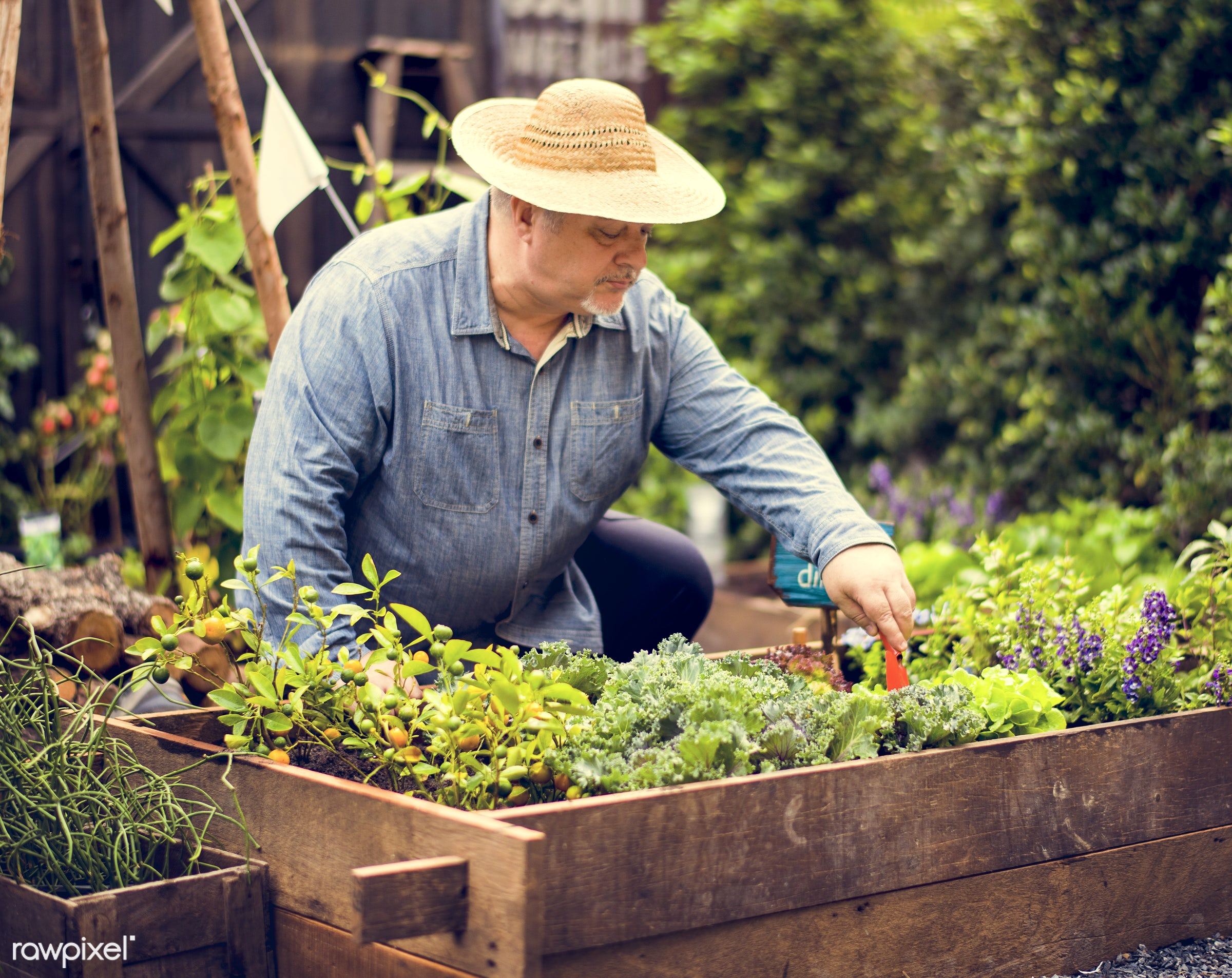 plant, salad, person, plants, leaves, spring, people, farm, hand, tree, farmer, hands, fresh, tree bed, dig, dirt, wooden...