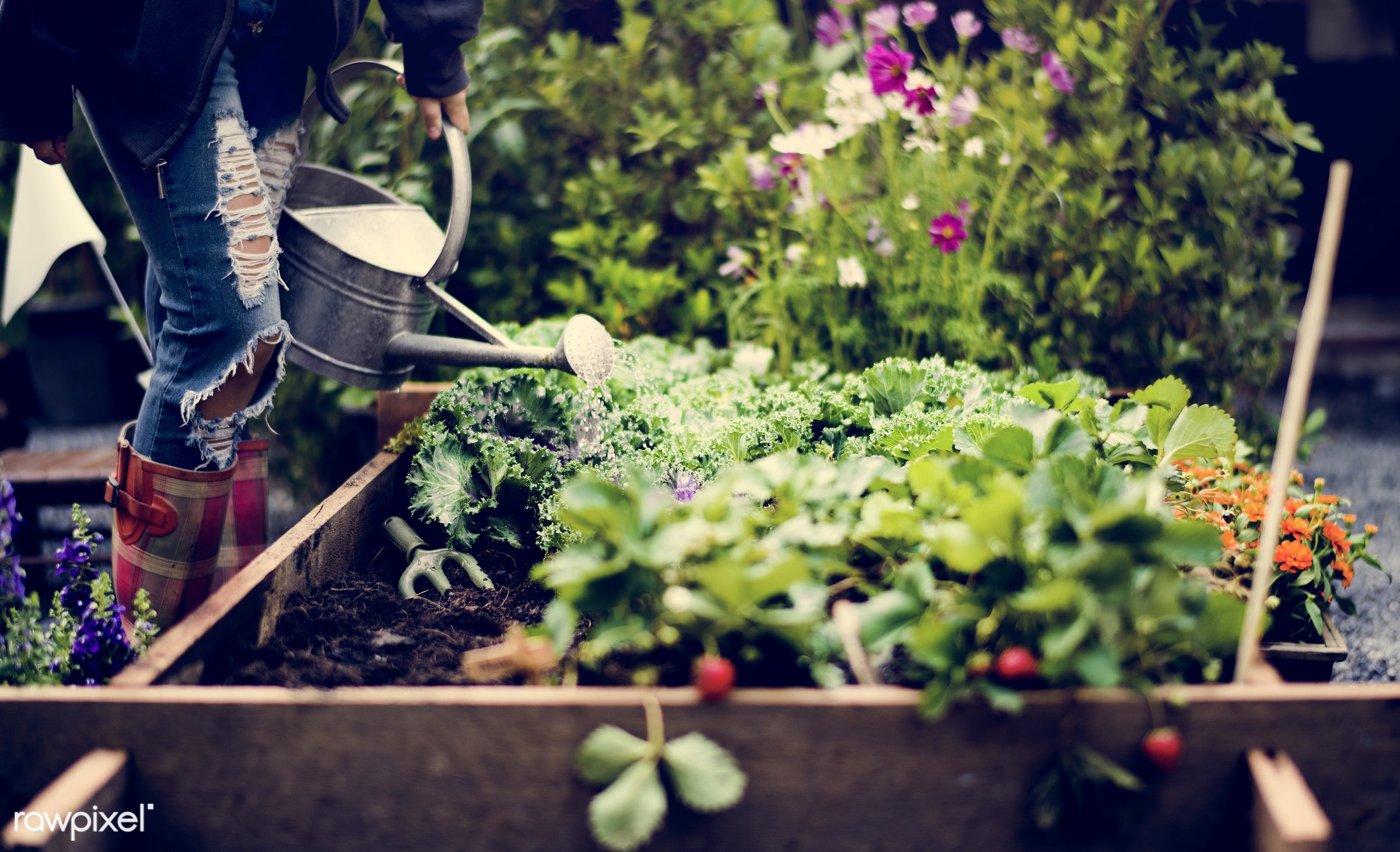 watering, plant, person, plants, leaves, people, hand, farm, tree, farmer, hands, fresh, dirt, wooden box, green, planting,...