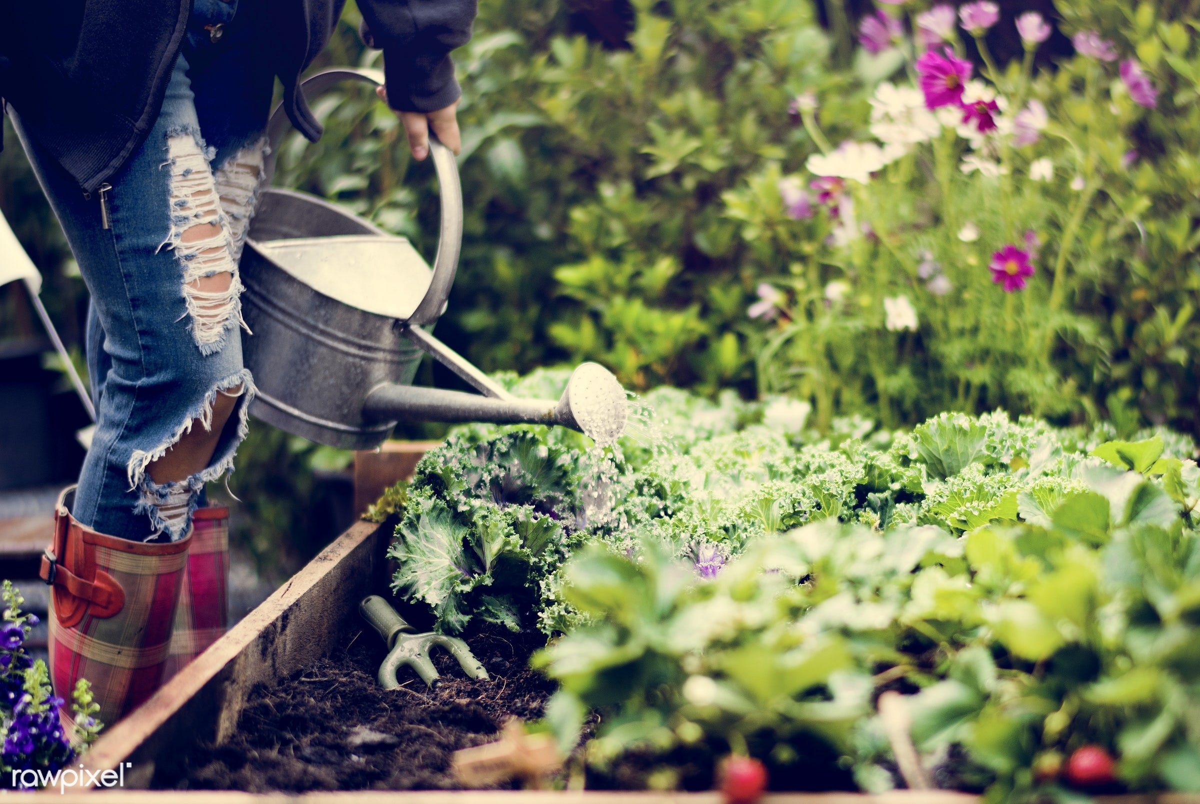 watering, plant, nutritious, greenhouse, farmer, fresh, lettuce, healthy eating, flower, green, agriculture, planting,...