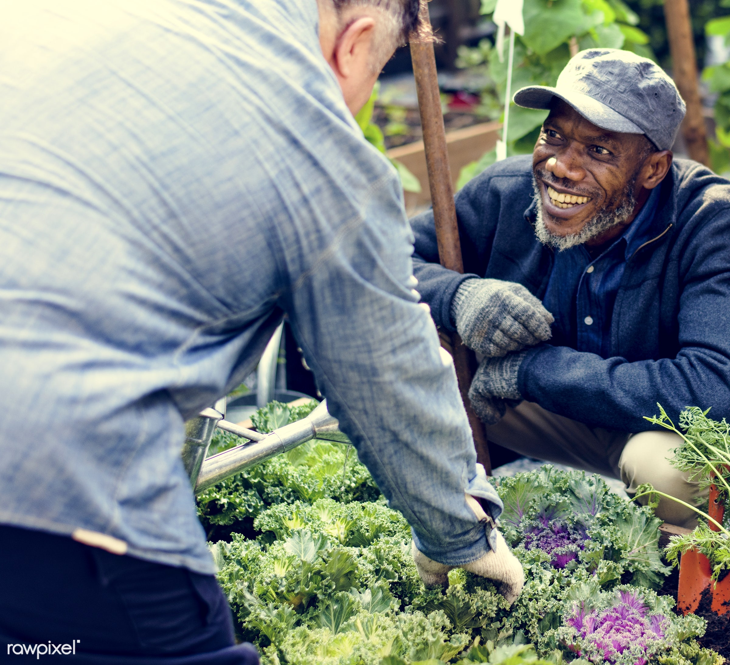 plant, watering, nutritious, greenhouse, friends, farmer, fresh, lettuce, healthy eating, friendship, men, smile, cheerful,...