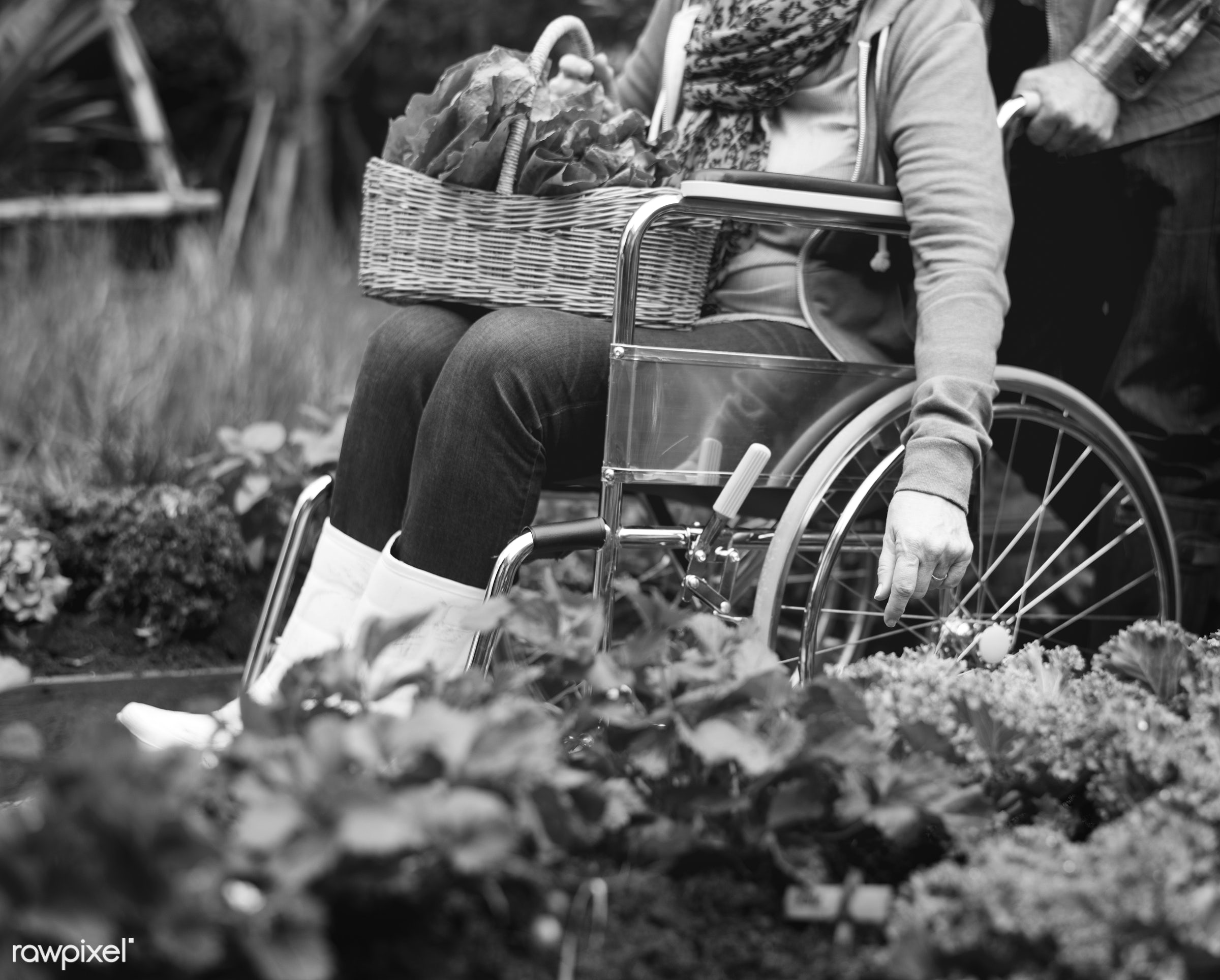 salad, person, relax, people, crop, retirement, farmer, woman, lifestyle, dirt, agriculture, planting, leisure, nutrition,...