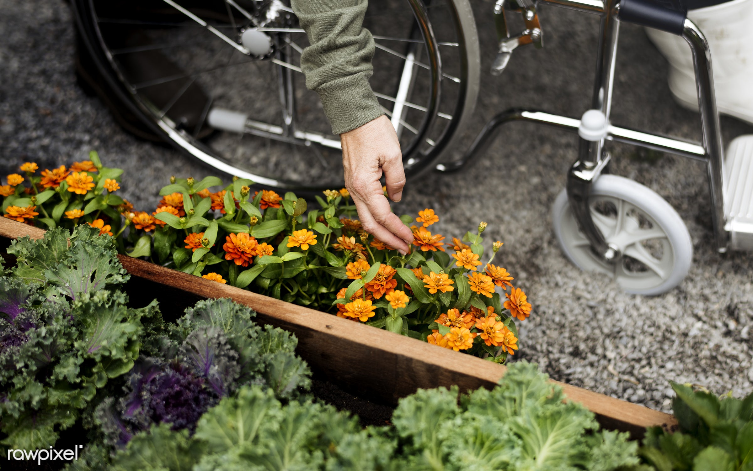salad, person, relax, people, crop, retirement, farmer, woman, lifestyle, dirt, flowers, agriculture, planting, leisure,...