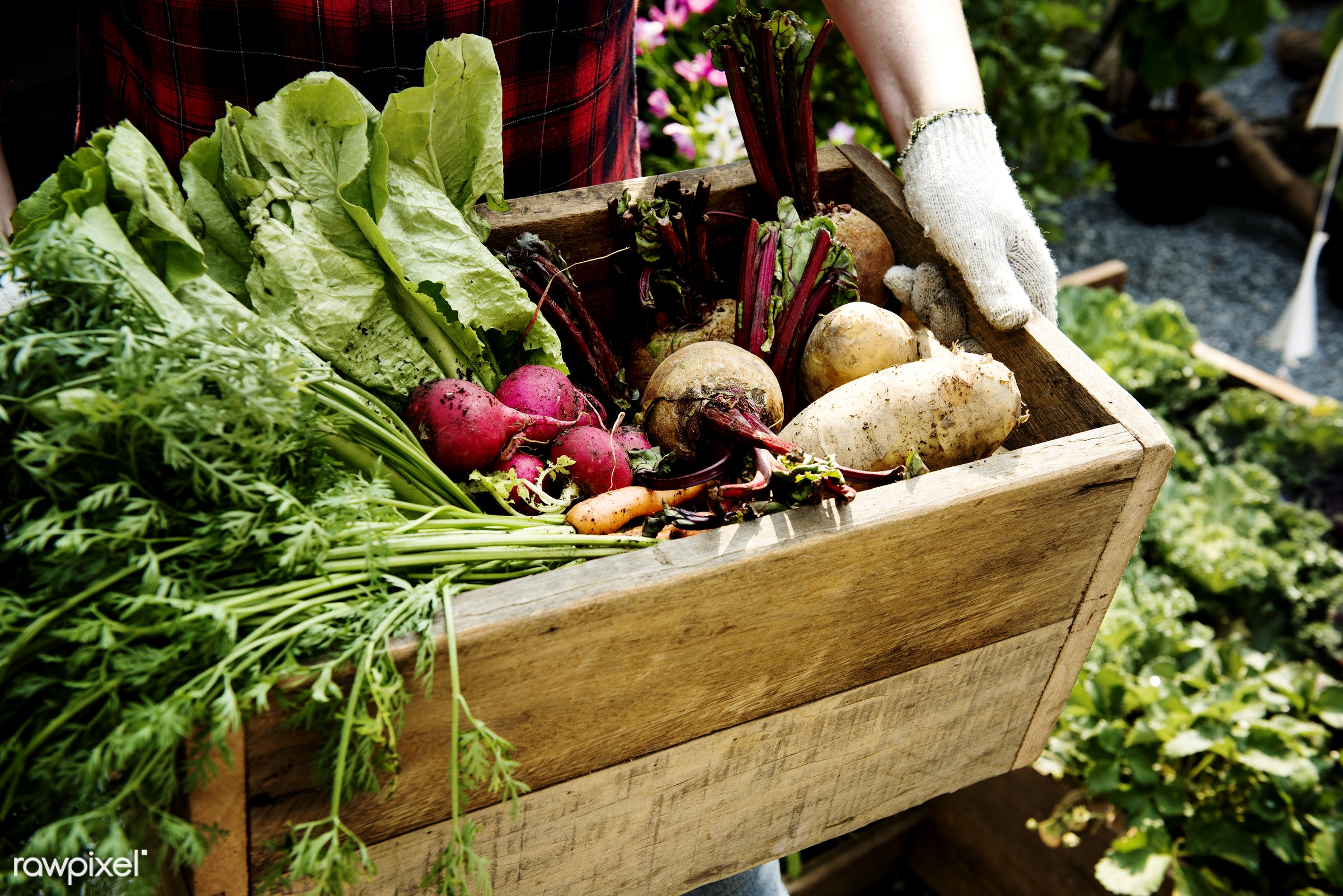 countryside, plant, person, greenhouse, botany, shrub, botanical, plantation, caucasian, nature, tree, farmer, woman,...