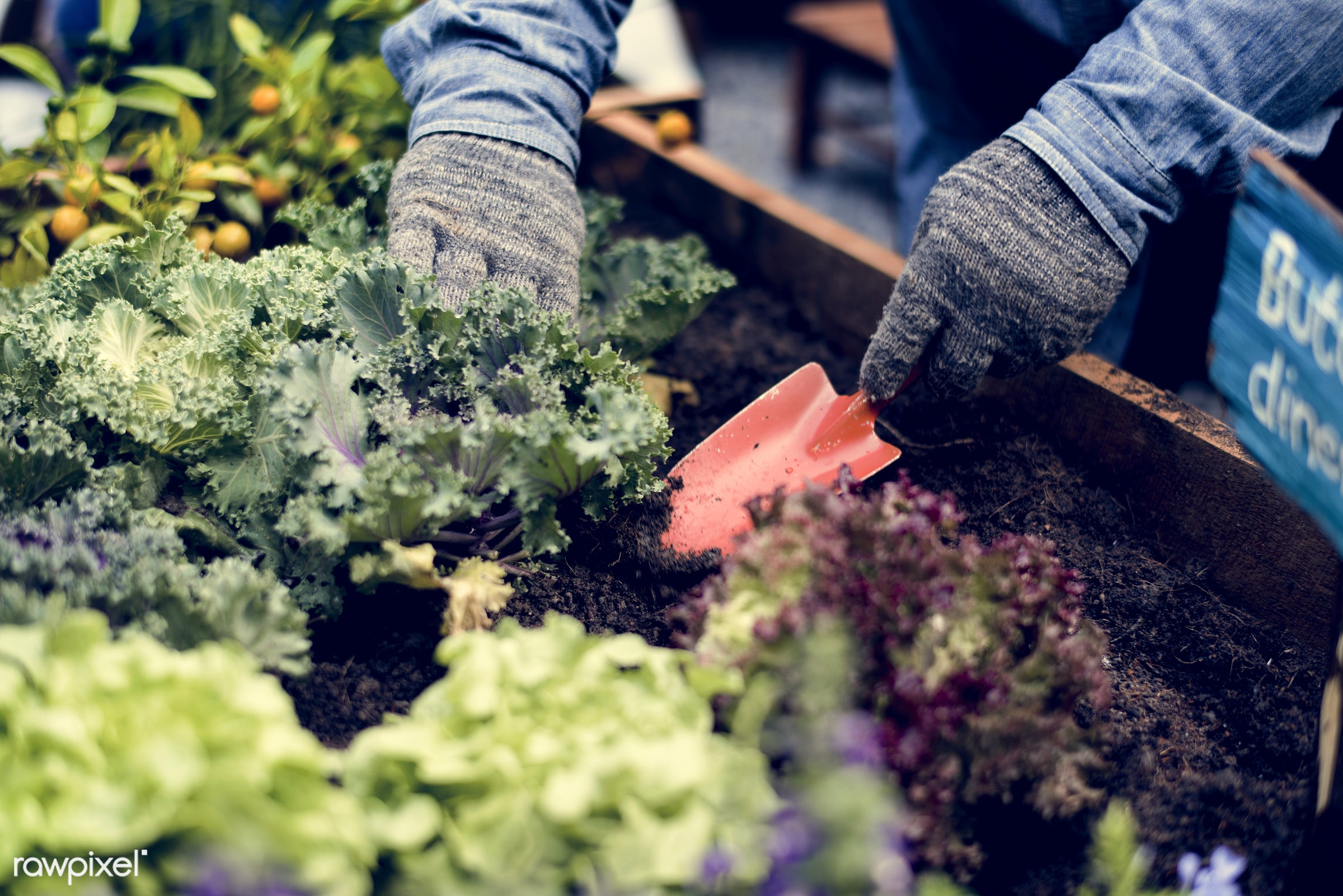 plant, nutritious, greenhouse, farmer, fresh, hands, lettuce, healthy eating, green, agriculture, planting, healthy...