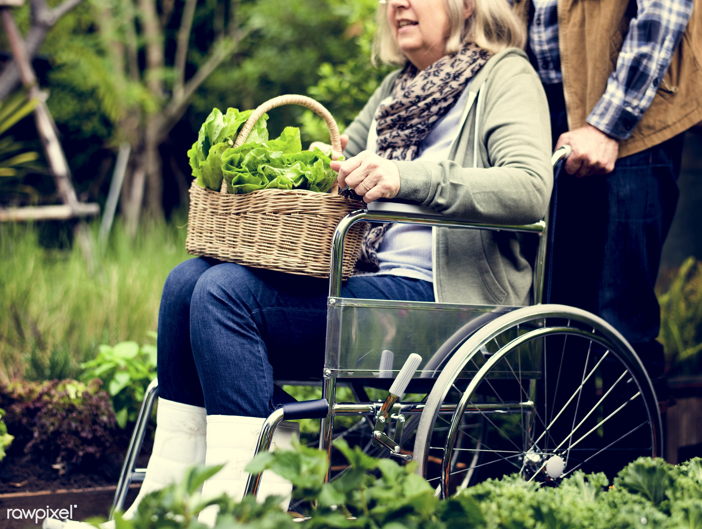 plant, nutritious, love, farmer, wheelchair, fresh, woman, lettuce, family, healthy eating, couple, man, take care, green,...