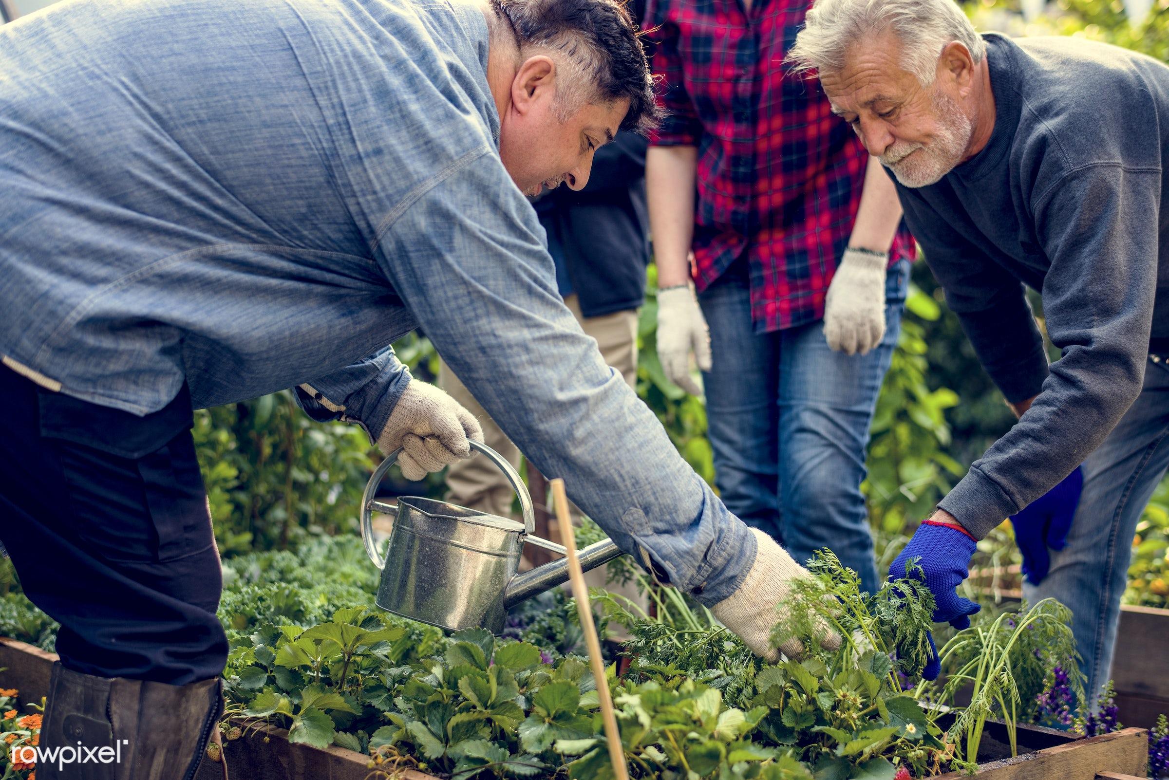 plant, nutritious, greenhouse, friends, farmer, fresh, lettuce, healthy eating, friendship, men, flower, diversity, support...