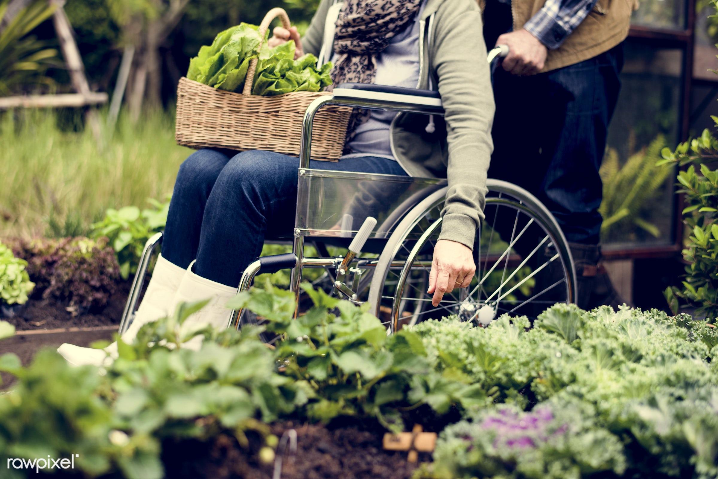 plant, nutritious, love, farmer, fresh, wheelchair, family, lettuce, woman, healthy eating, couple, man, take care, green,...