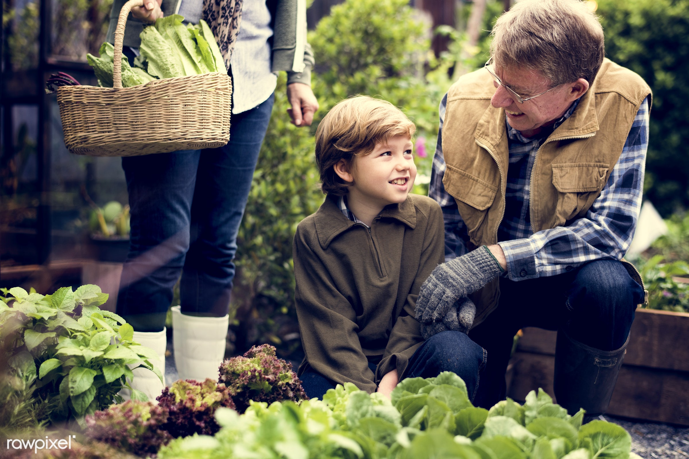 salad, person, leaves, people, tree, farmer, tree bed, flowers, dirt, agriculture, planting, present, nutrition, vegetable,...