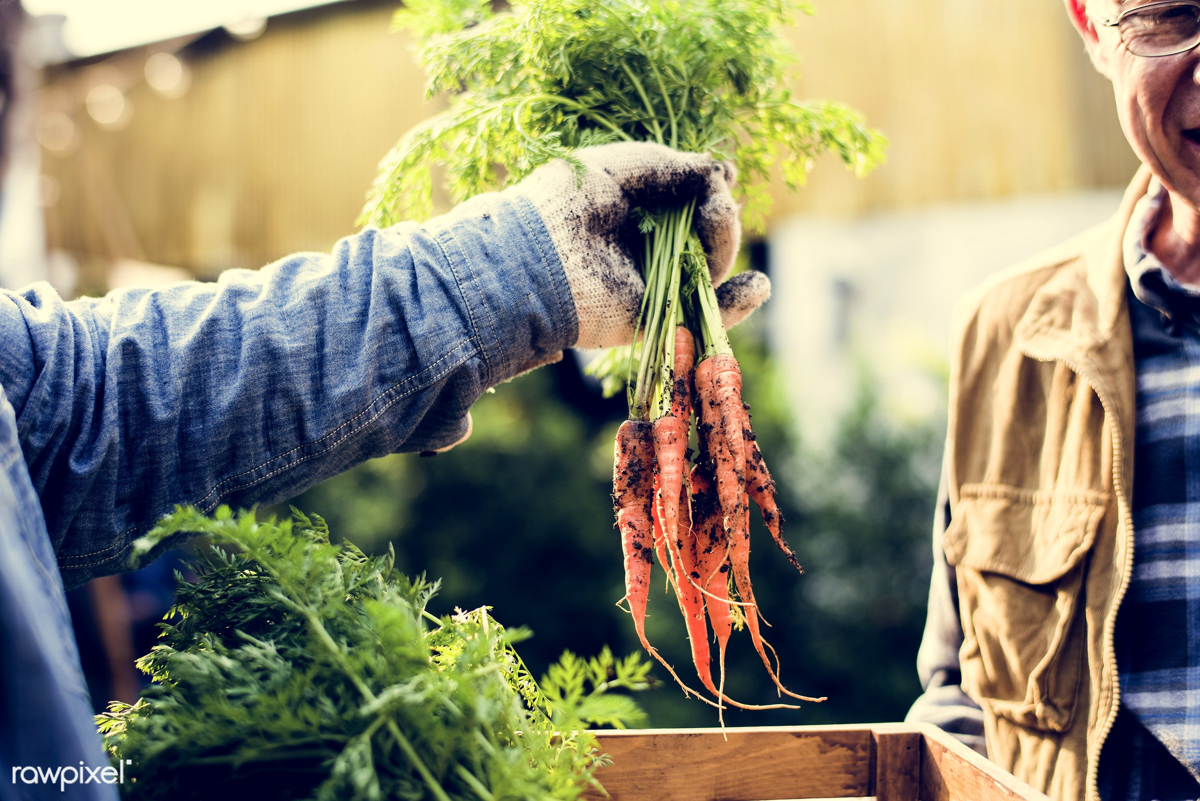 plant, carrot, nutritious, give, greenhouse, customer, sharing, farmer, fresh, healthy eating, men, green, agriculture,...