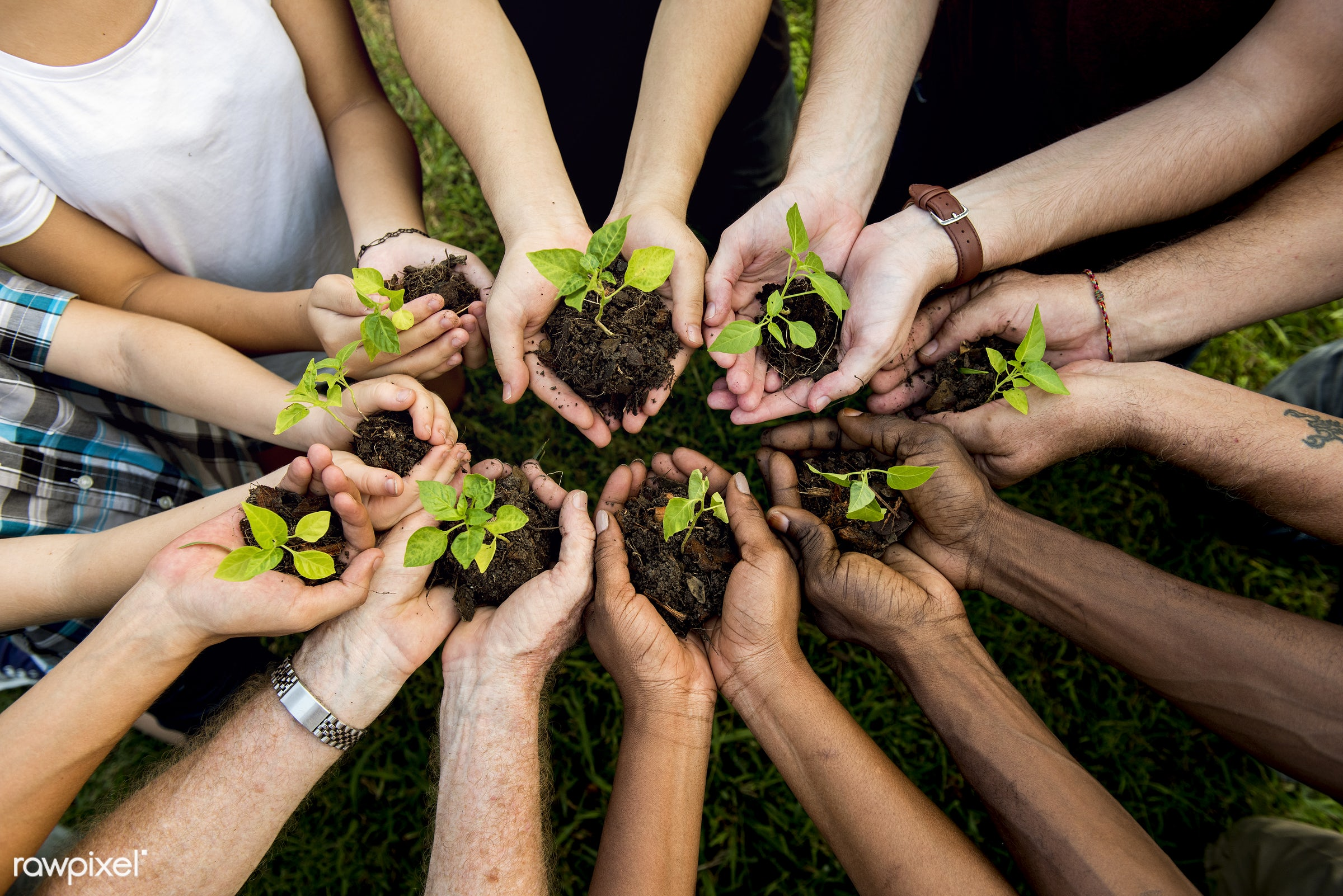 person, holding, leaves, people, together, kid, help, tree, nature, woman, friendship, sustainability, dirt, responsibility...