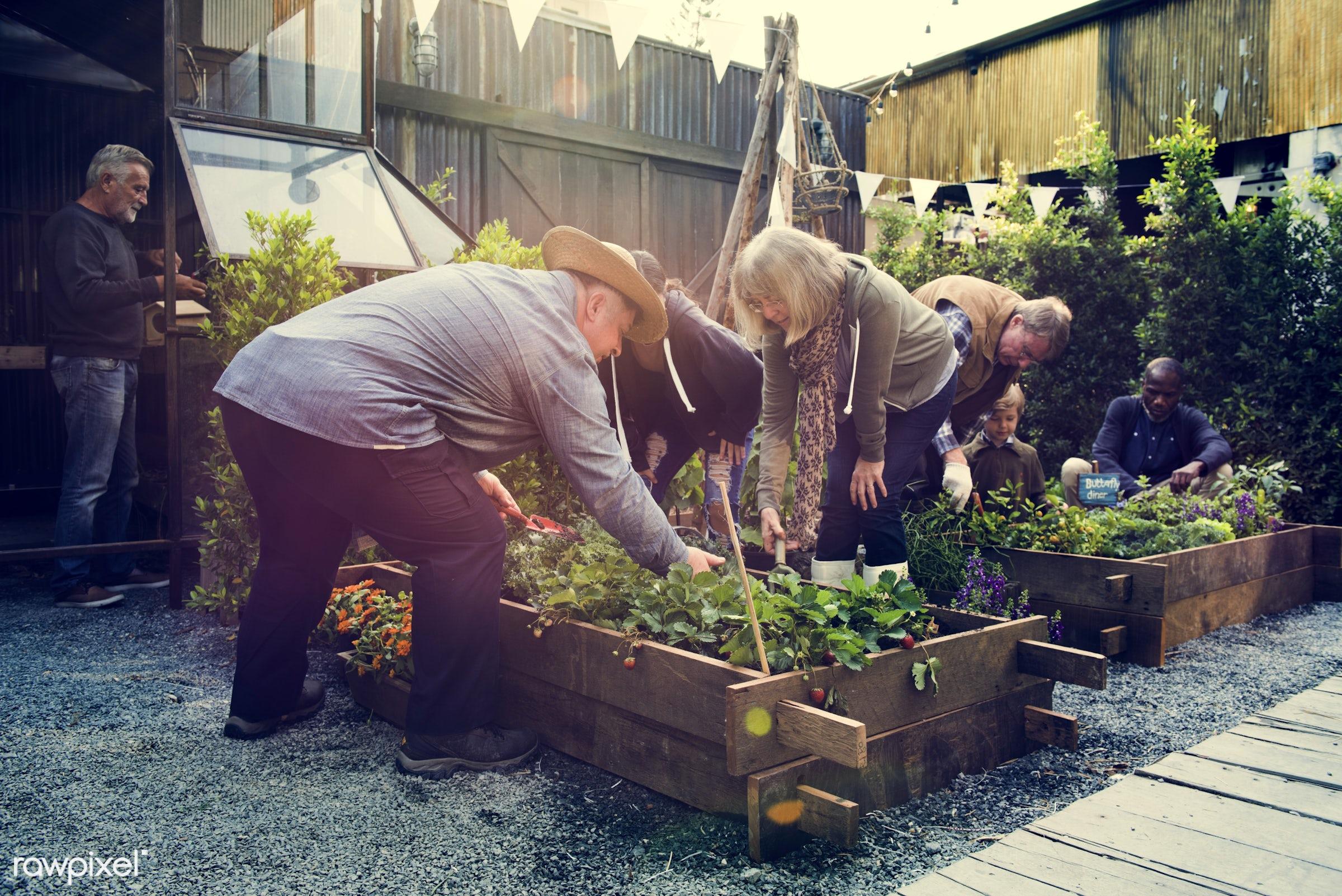 plant, nutritious, children, girl, farmer, young adult, fresh, lettuce, healthy eating, men, flower, green, african descent...