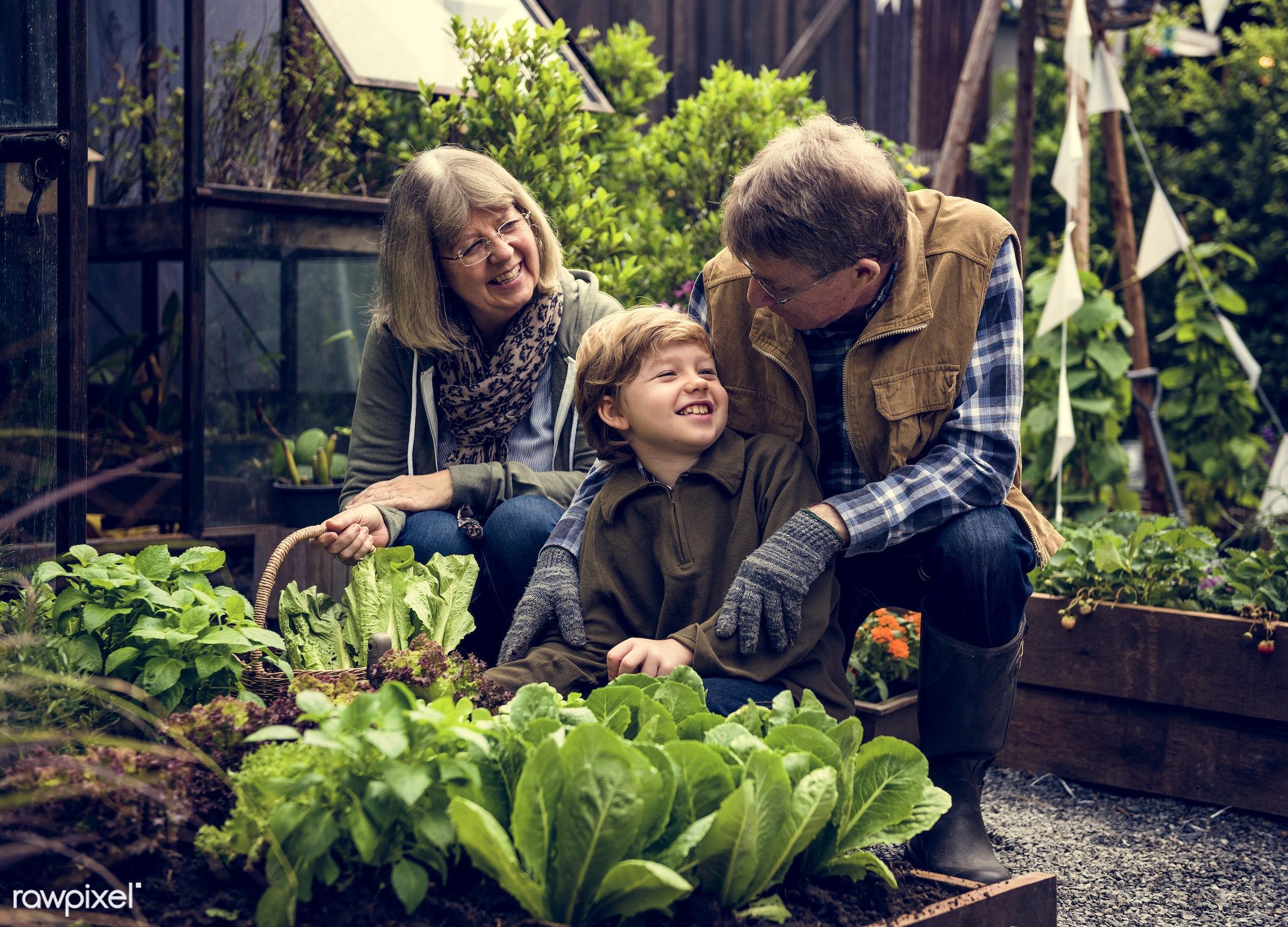 plant, carrot, nutritious, grandfather, basil, farmer, fresh, family, lettuce, woman, healthy eating, smile, grandson,...