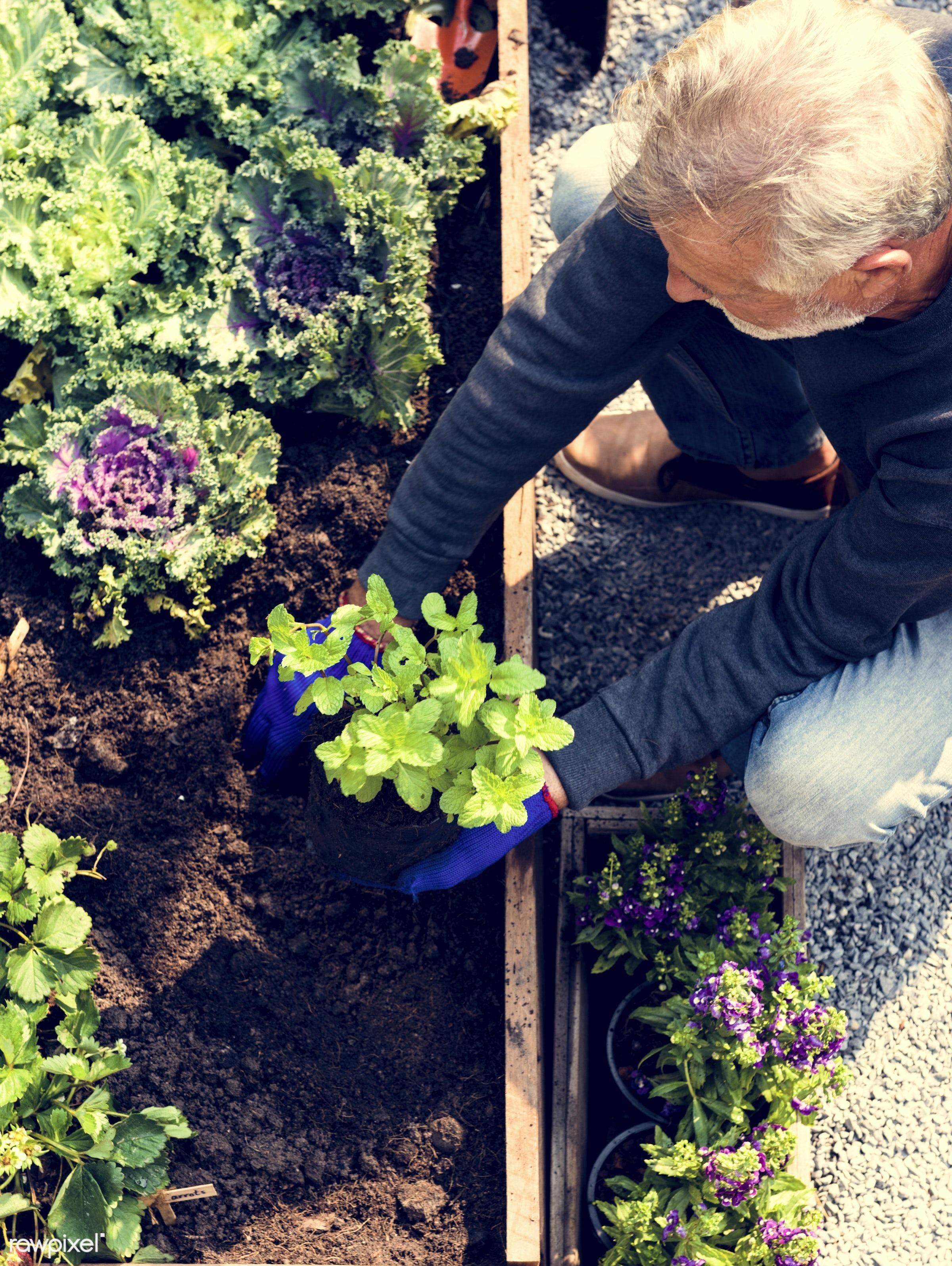 countryside, person, greenhouse, botanical, plantation, caucasian, retirement, tree, farmer, nature, lifestyle, backyard,...