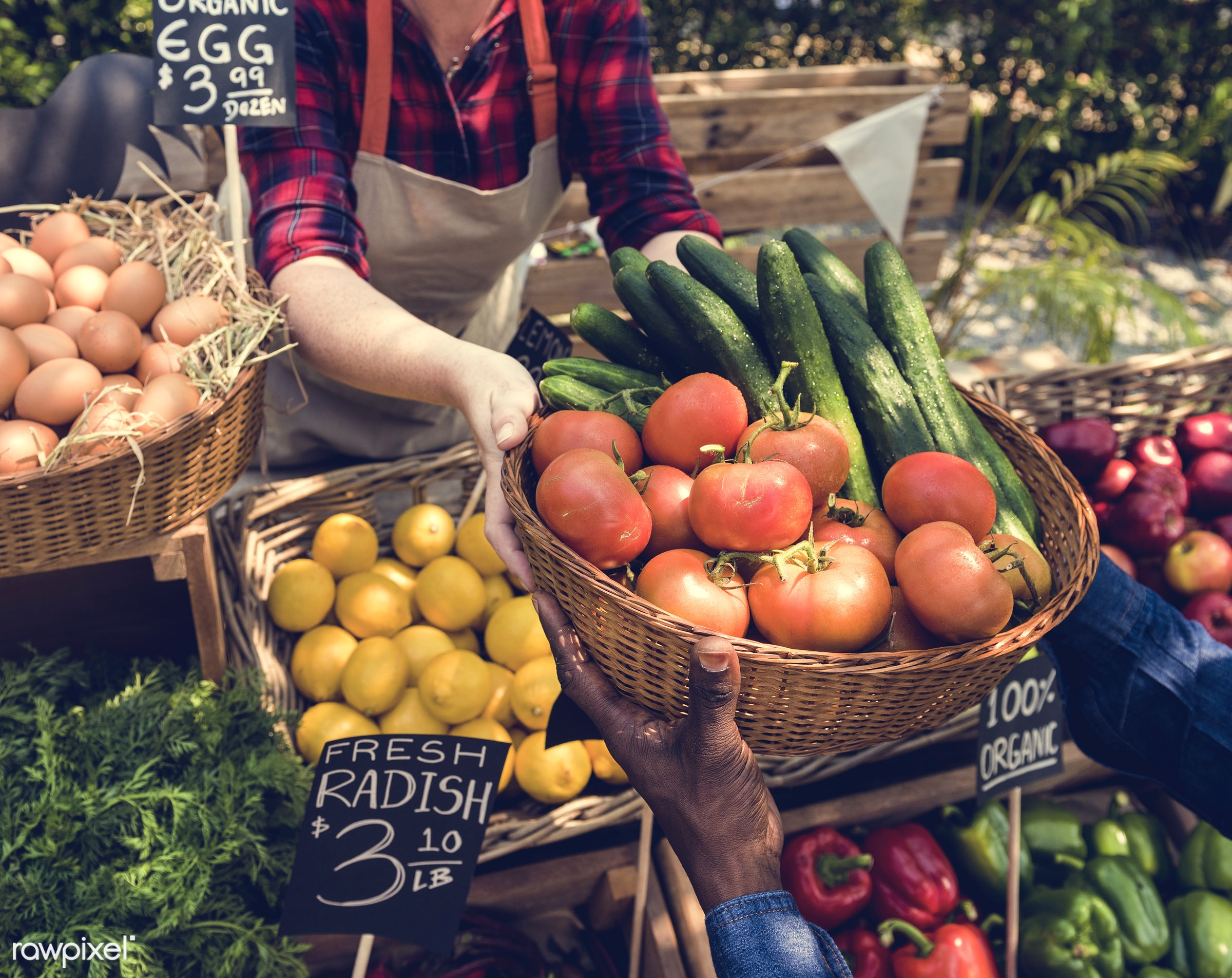 grocery, shop, nutritious, store, tomato, holding, bell pepper, egg, cucumber, farmer, fresh, healthy eating, marketplace,...